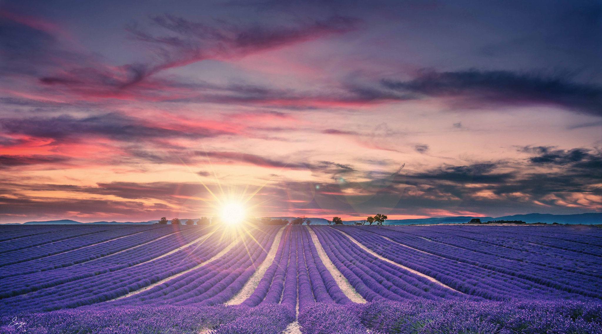 Coucher de soleil dans un champ de lavande à Valensole - Stage photo - Aix en provence