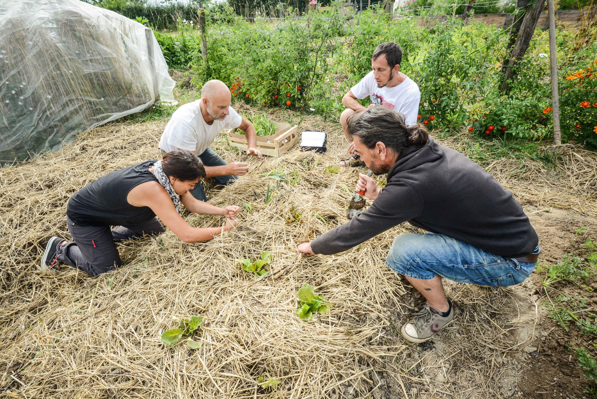 Atelier jardinage permacole