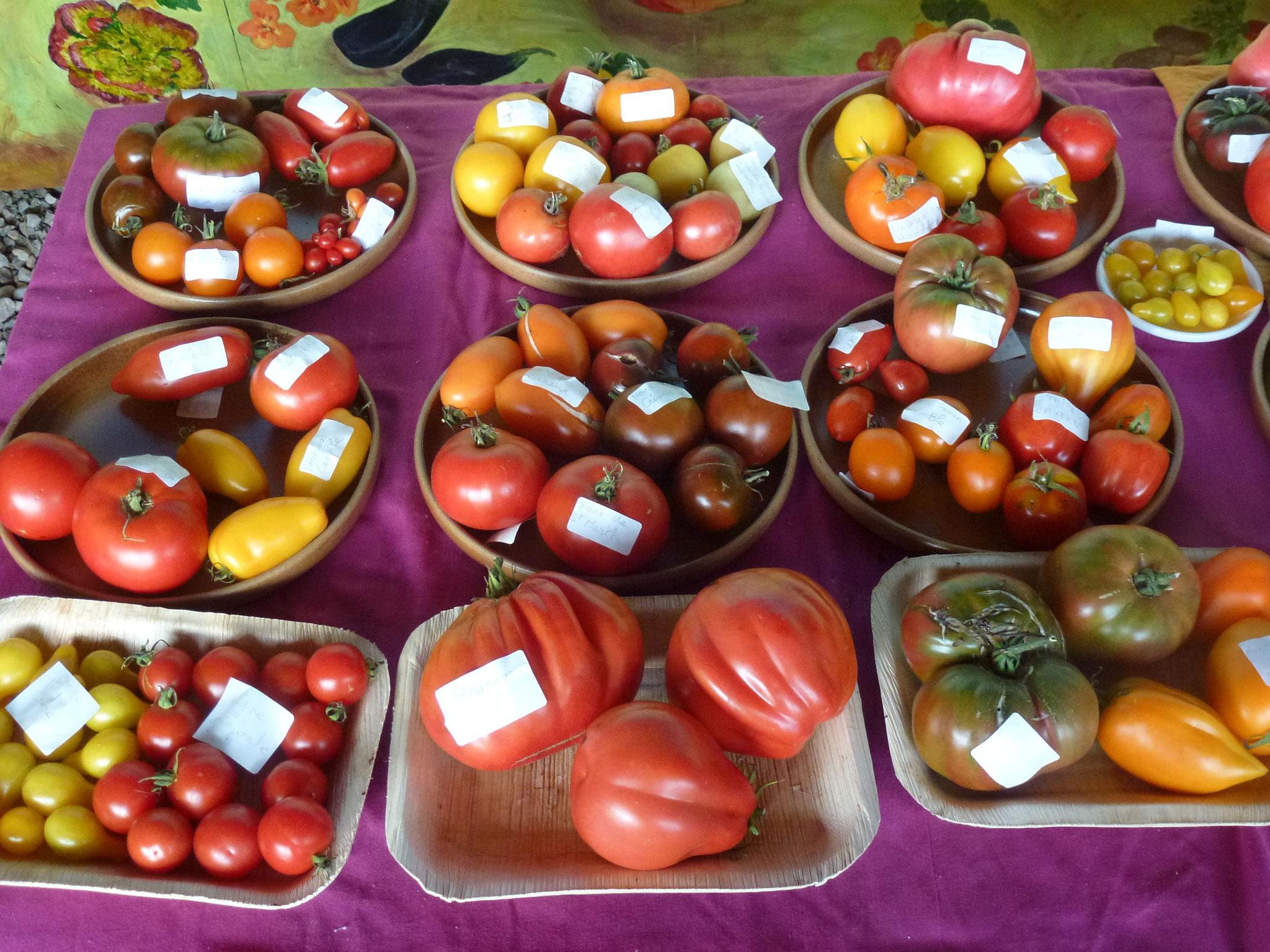 150 tomates à déguster pleines de couleurs!!
