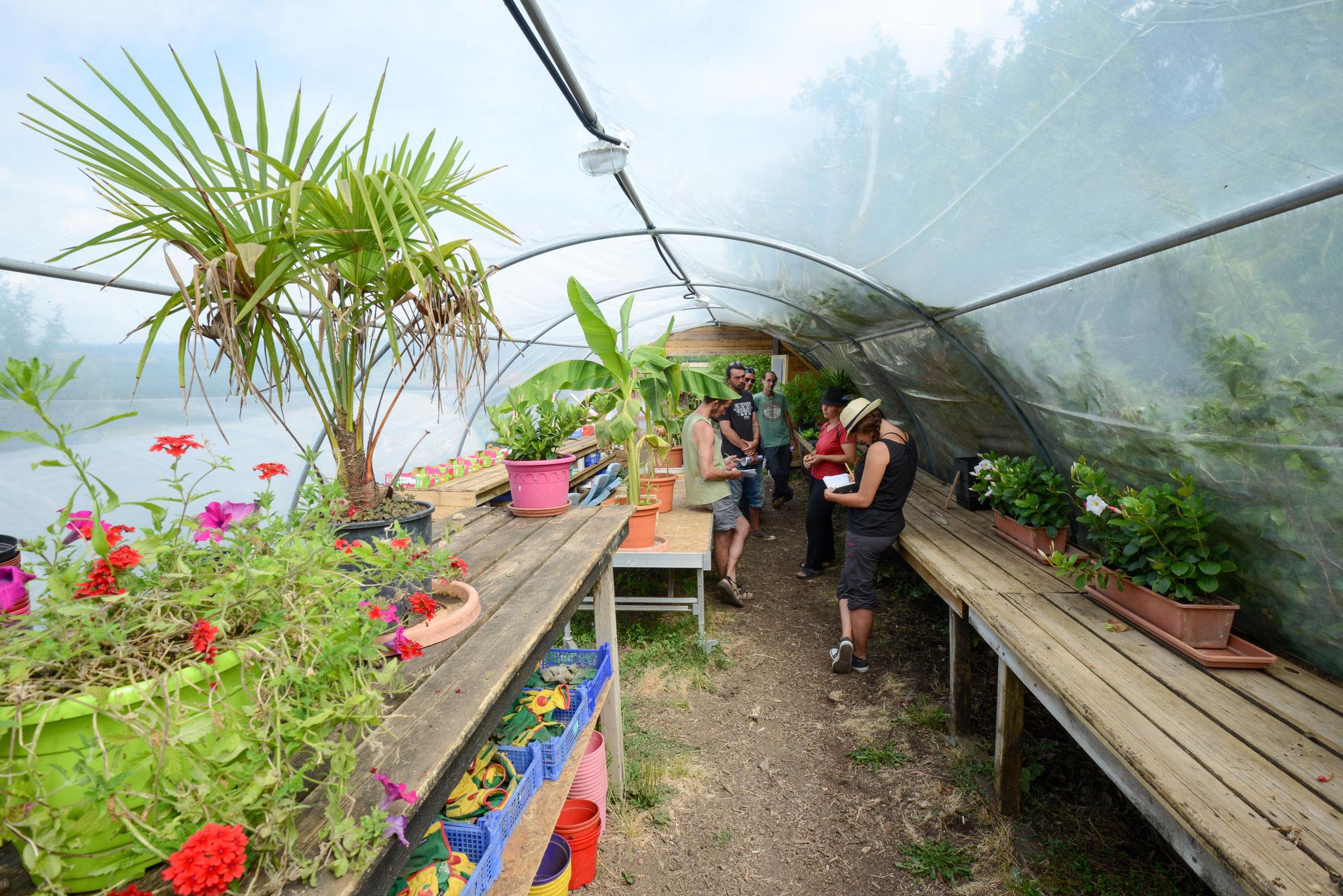 Formation permaculture avec la gestion d'une serre