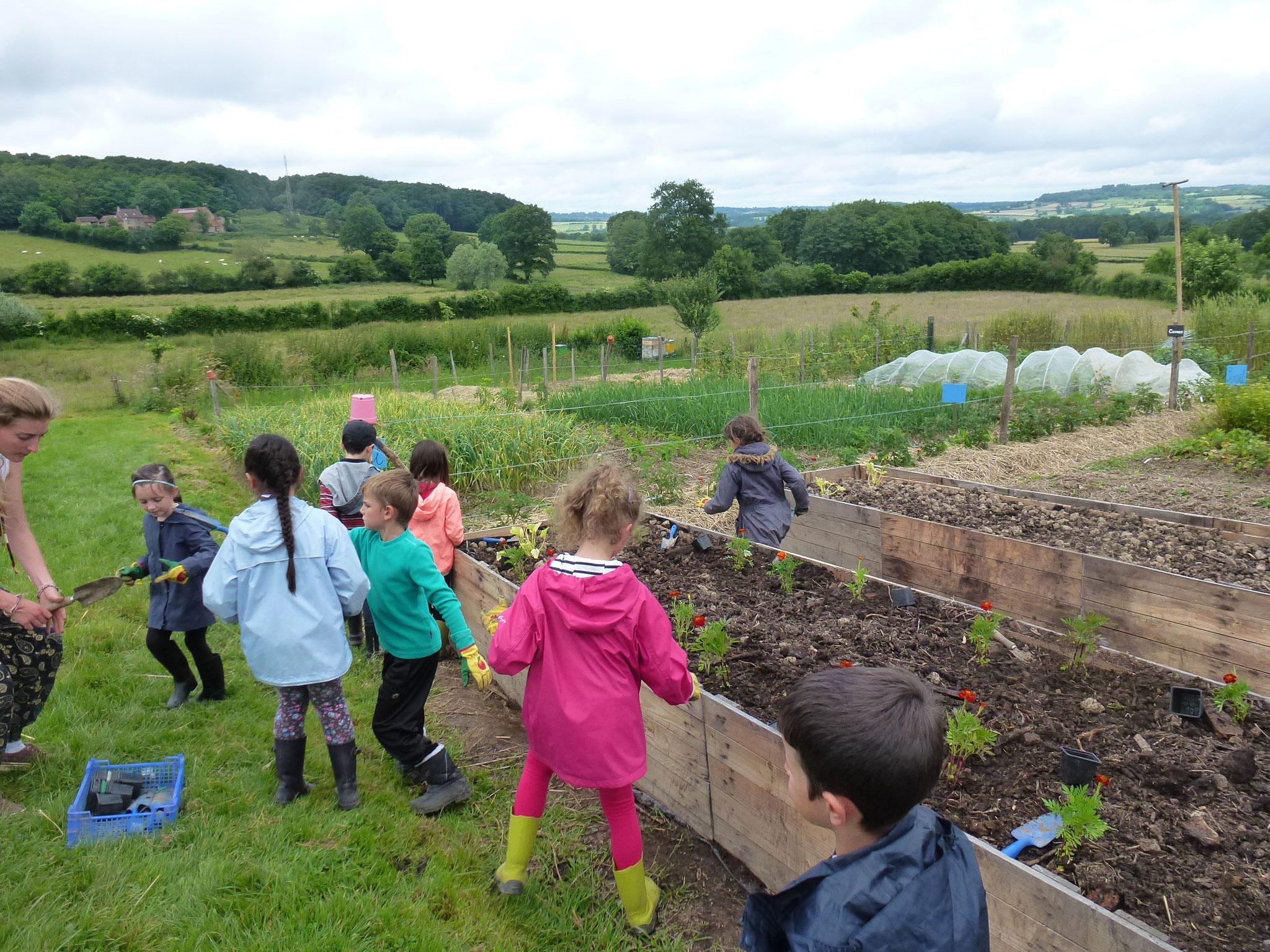 Atelier plantation dans une des buttes pédagogiques