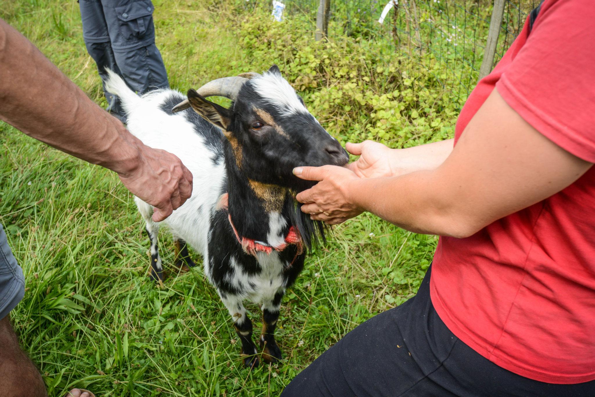Les animaux et la permaculture