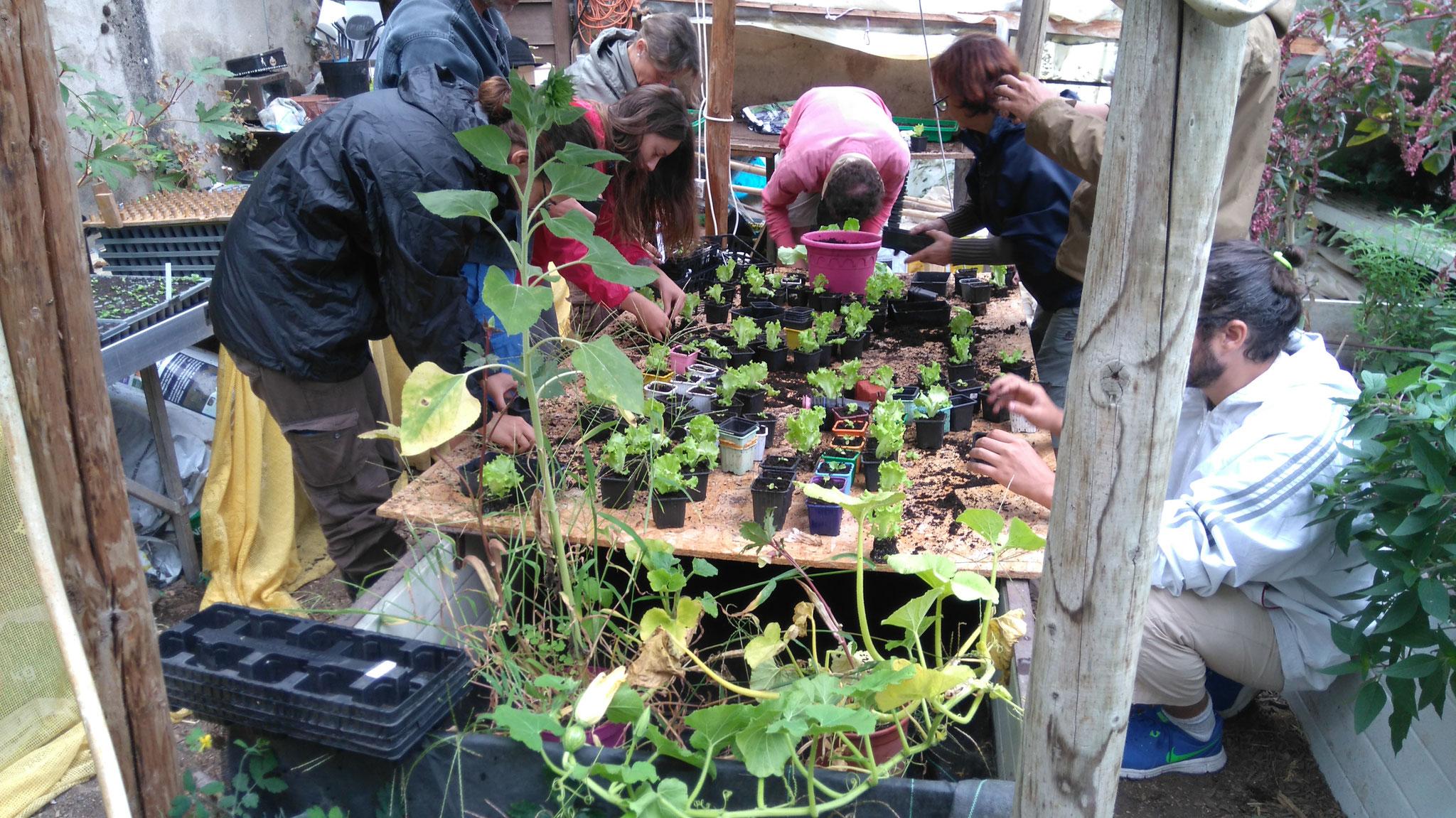 Produire en permaculture maraîchère