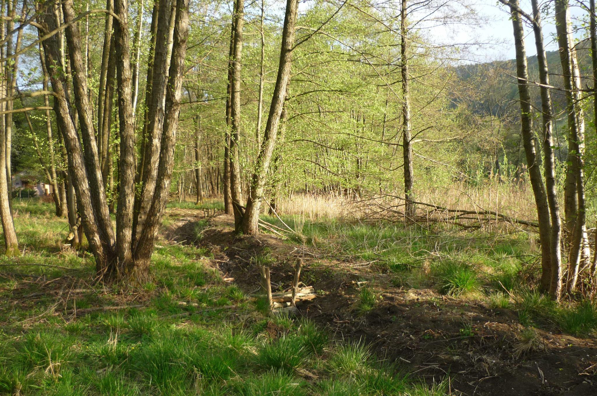 Drainage wird durch NABU Grundstück Verlegt Foto NABU