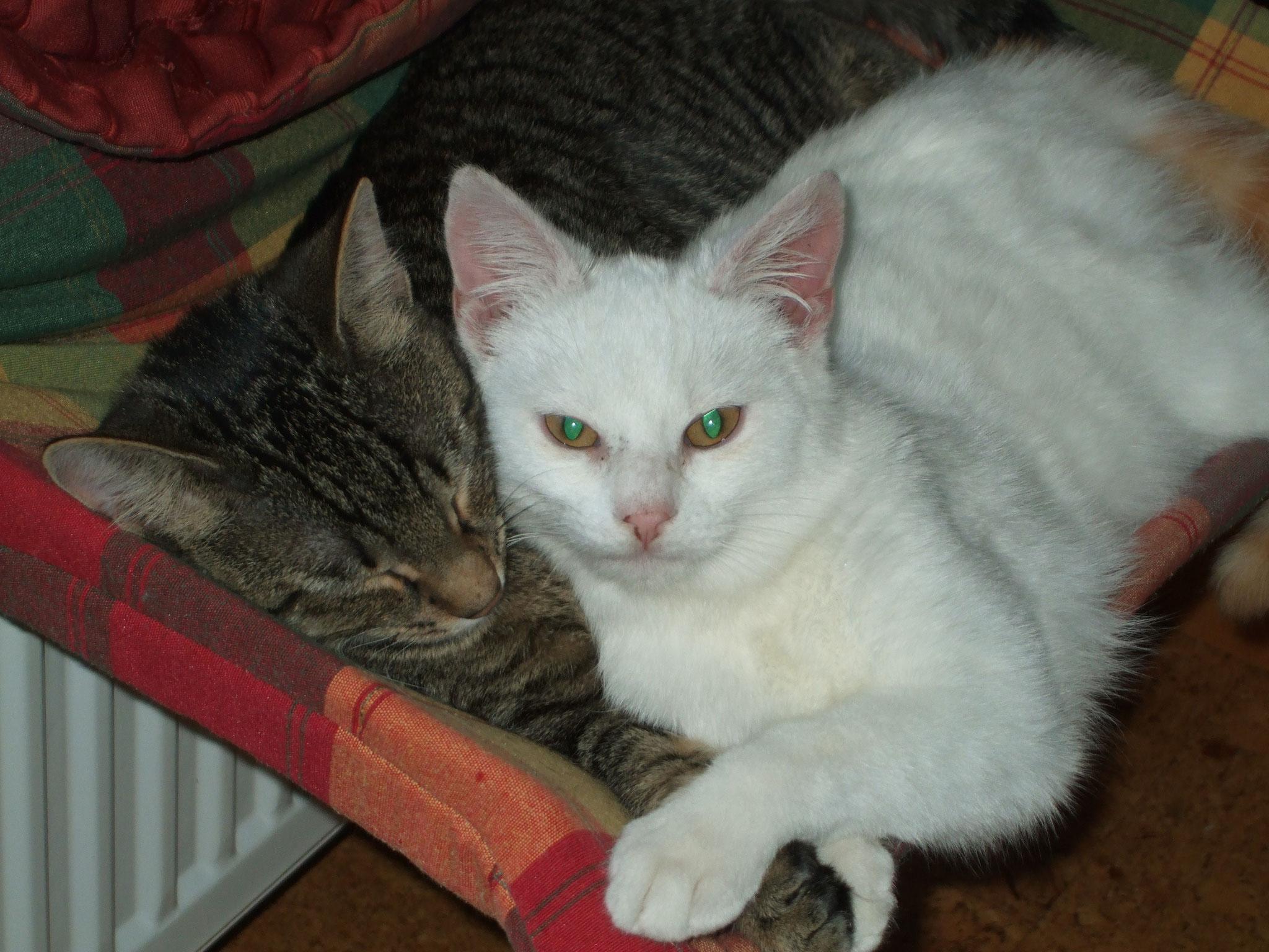 Kira und Simba