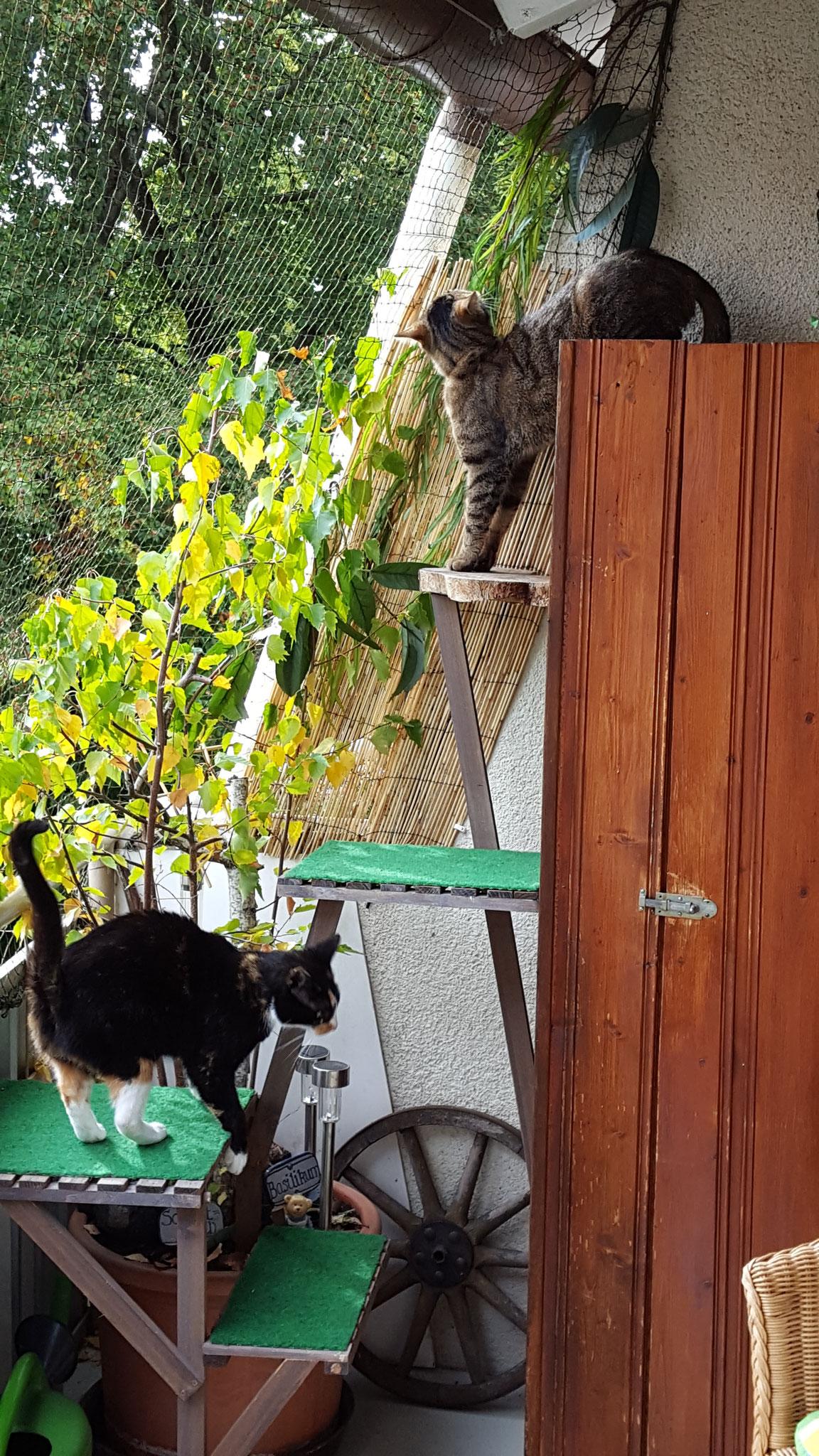 Minka und Balu