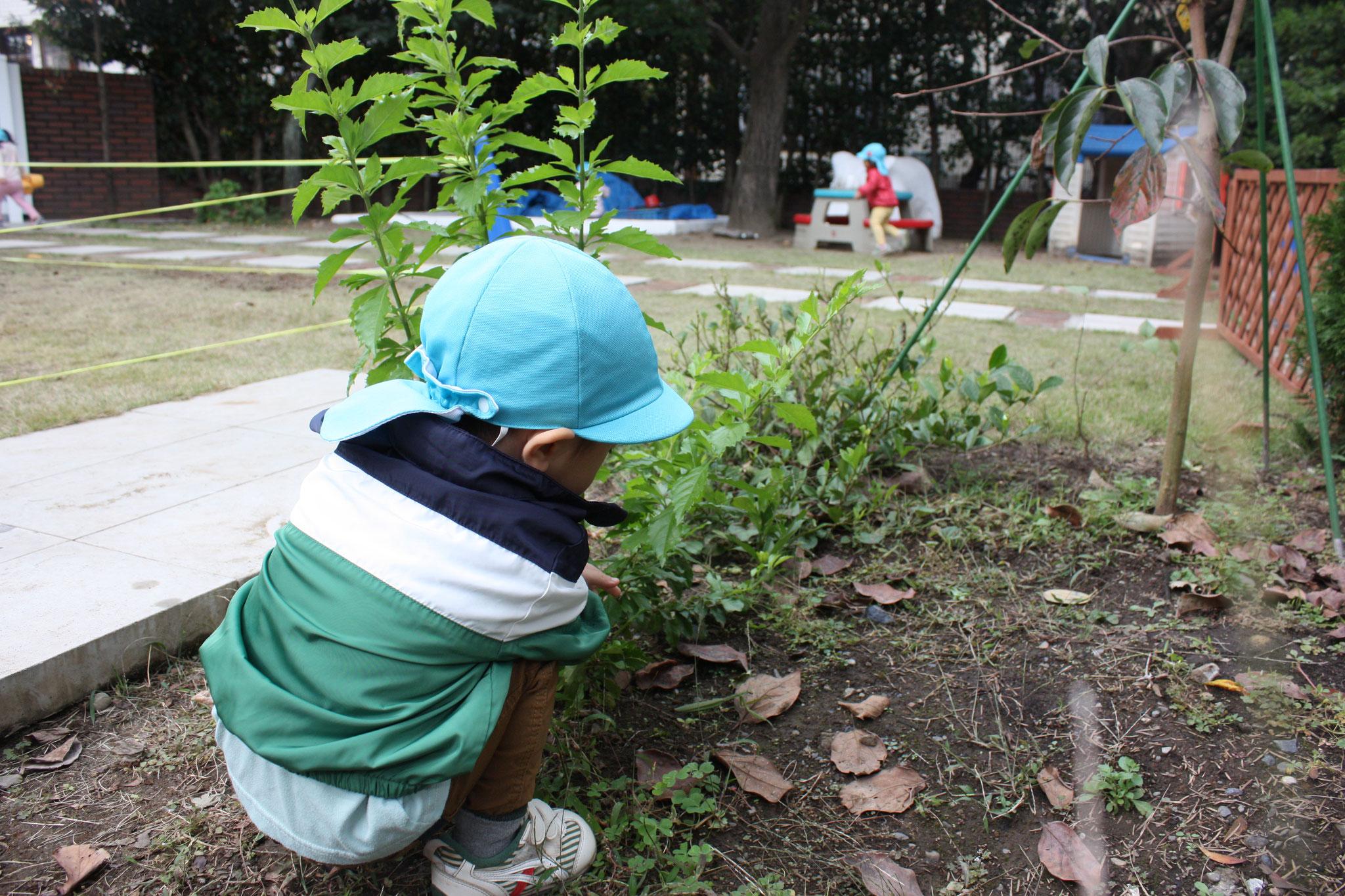 お庭でジーっと何かをみつめています。 何かな?? 「せんせい、かまきりいるよ!!」