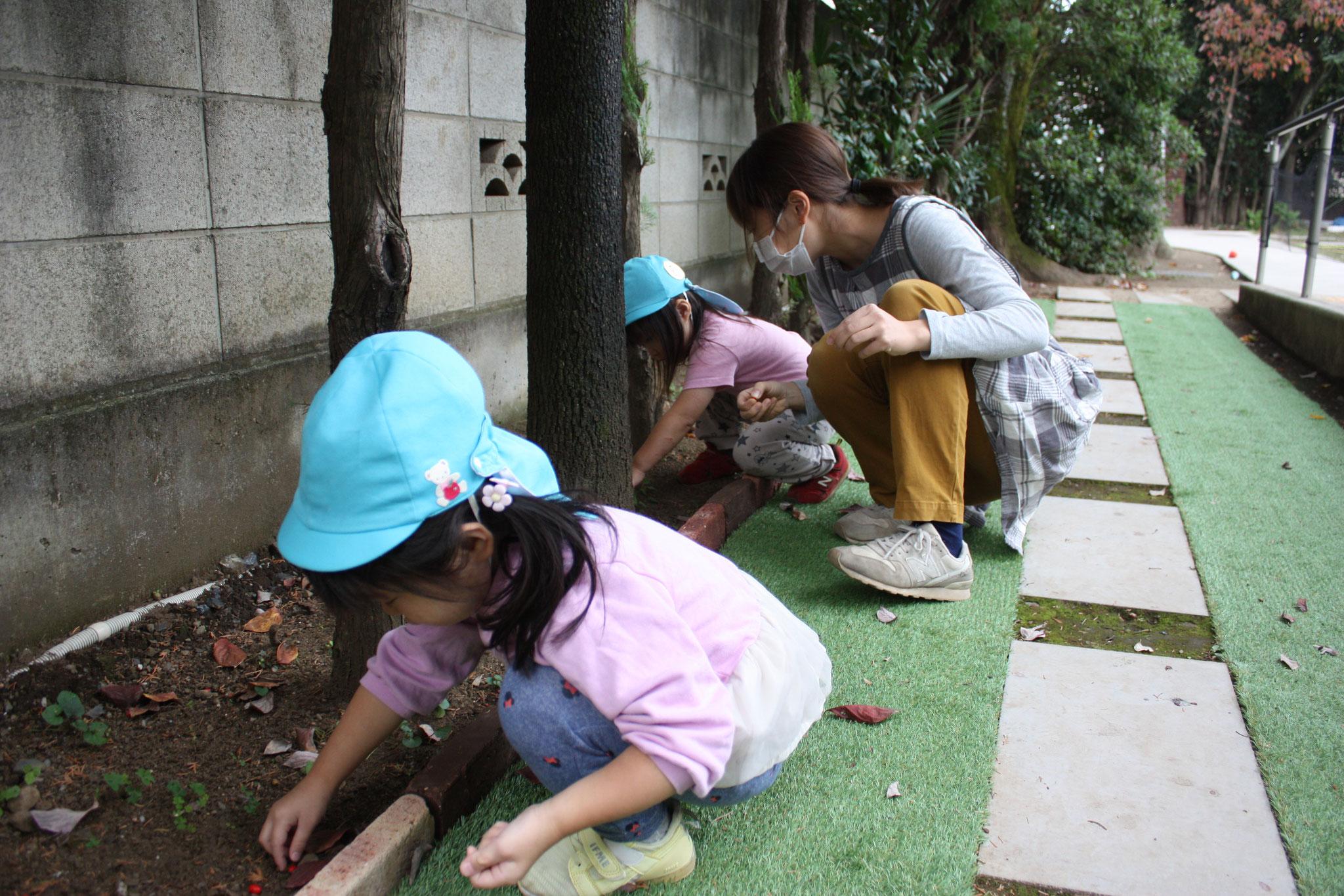園庭の実や葉っぱをじっくり集めています