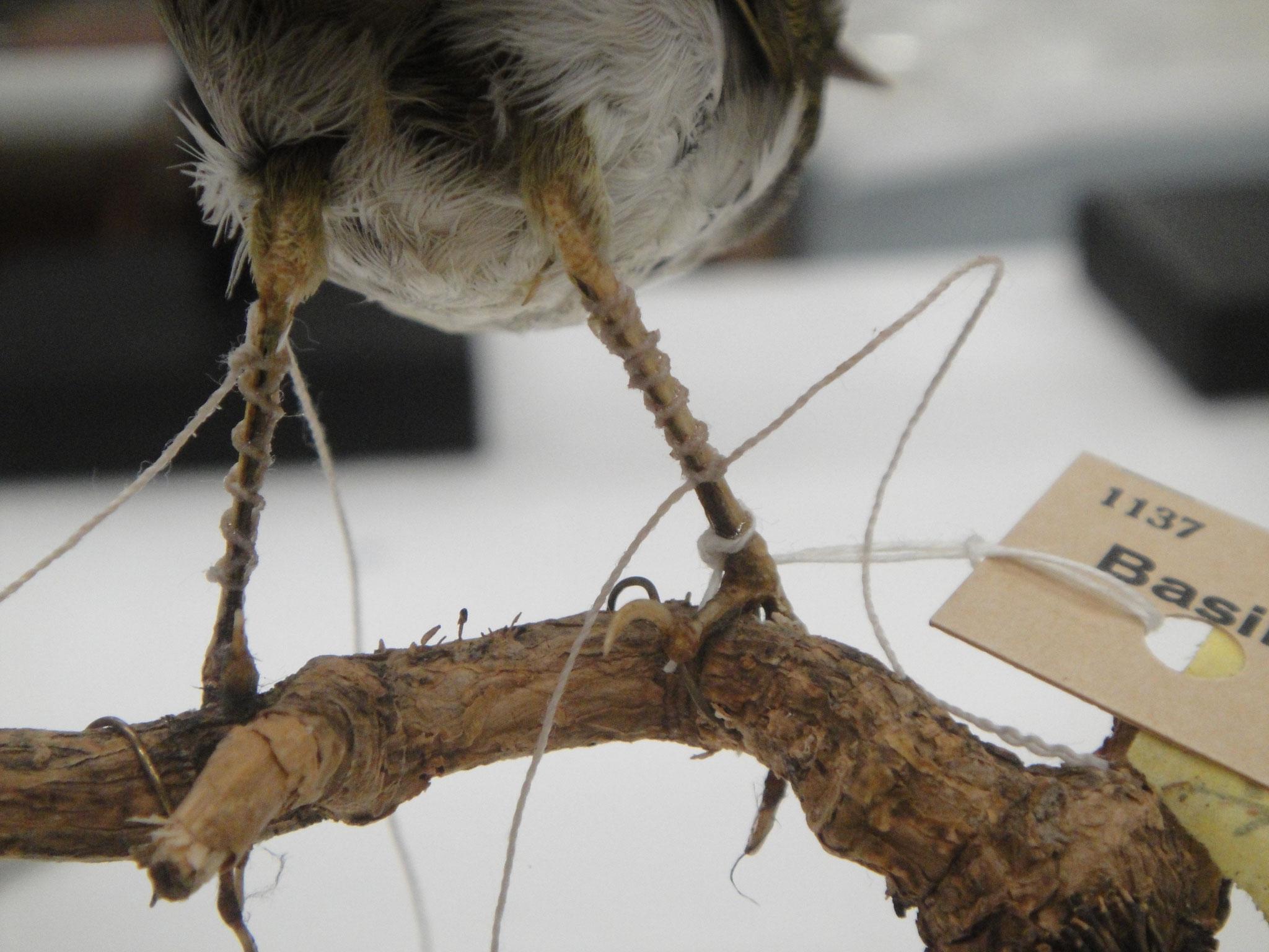 Reparatur geplatzter Vogelbeine