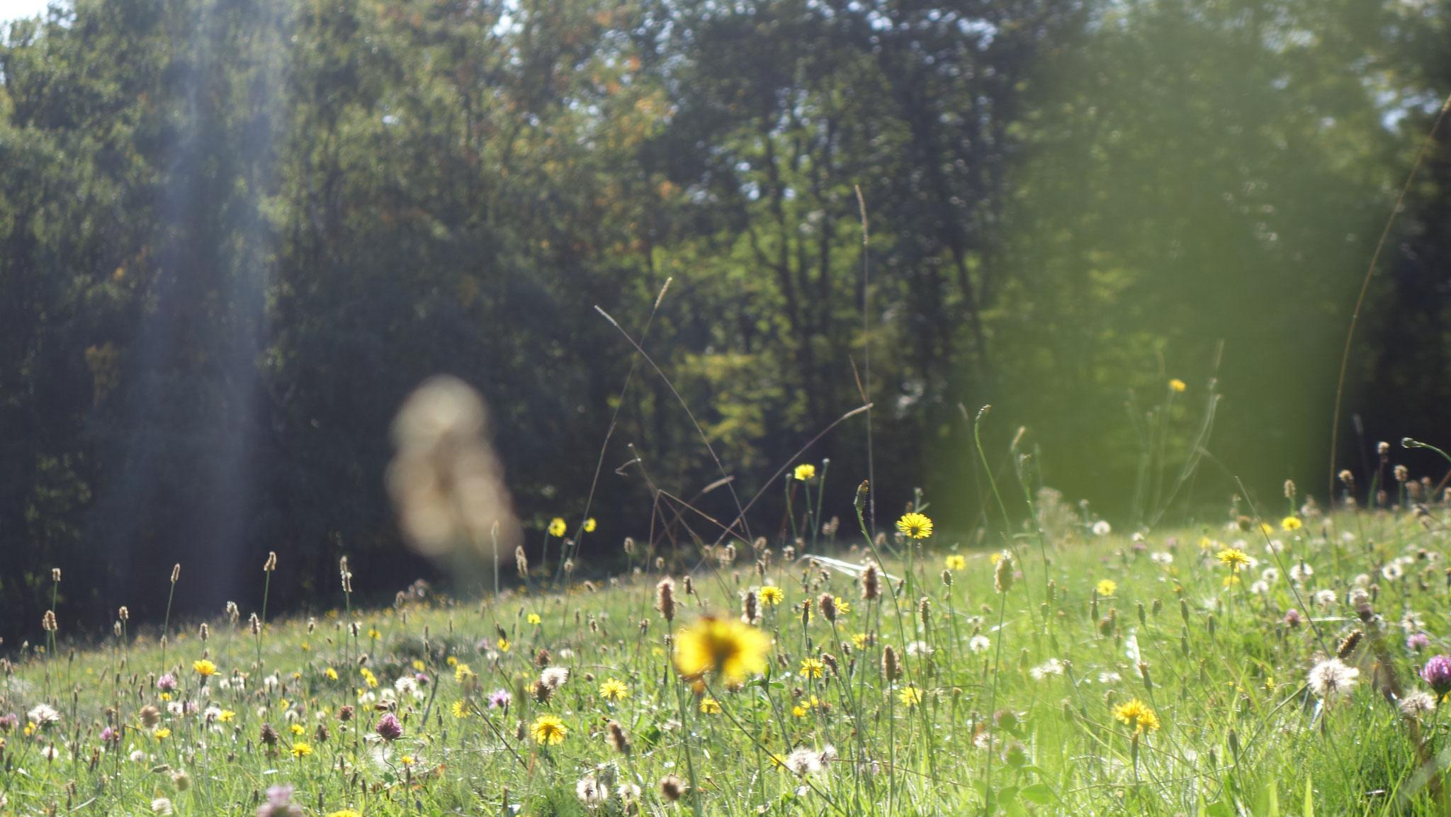 Prairies fleuries et biodiversité