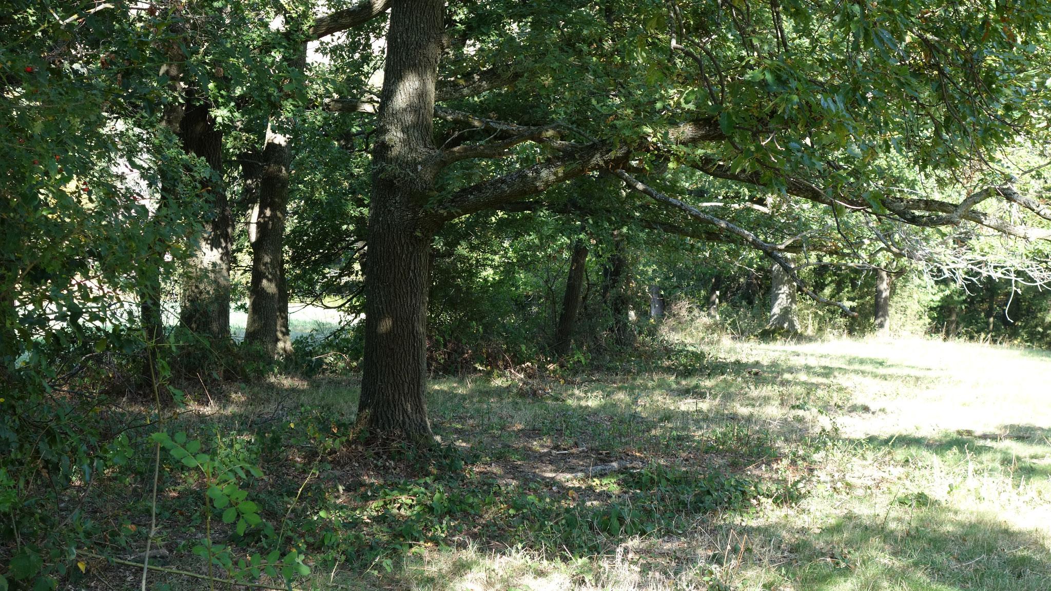 Des arbres et des haies