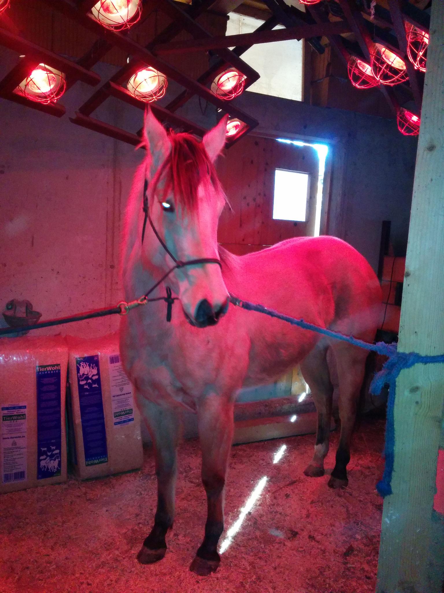 Pferdesolarium