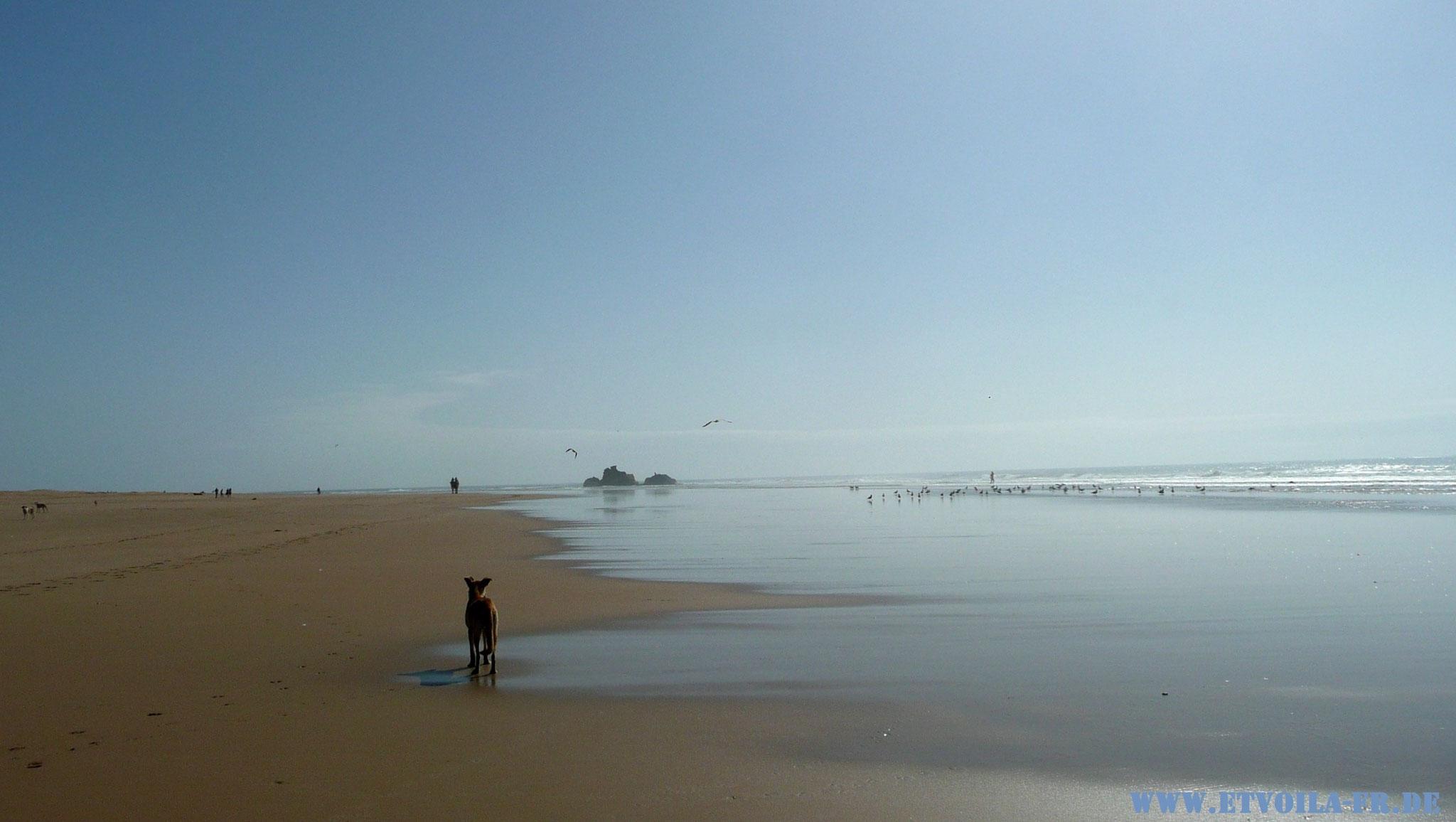 LE GRAND BLEU -  Französisch-Sprachkurs und endlose Weite am Atlantik in Esssoauira / Marokko