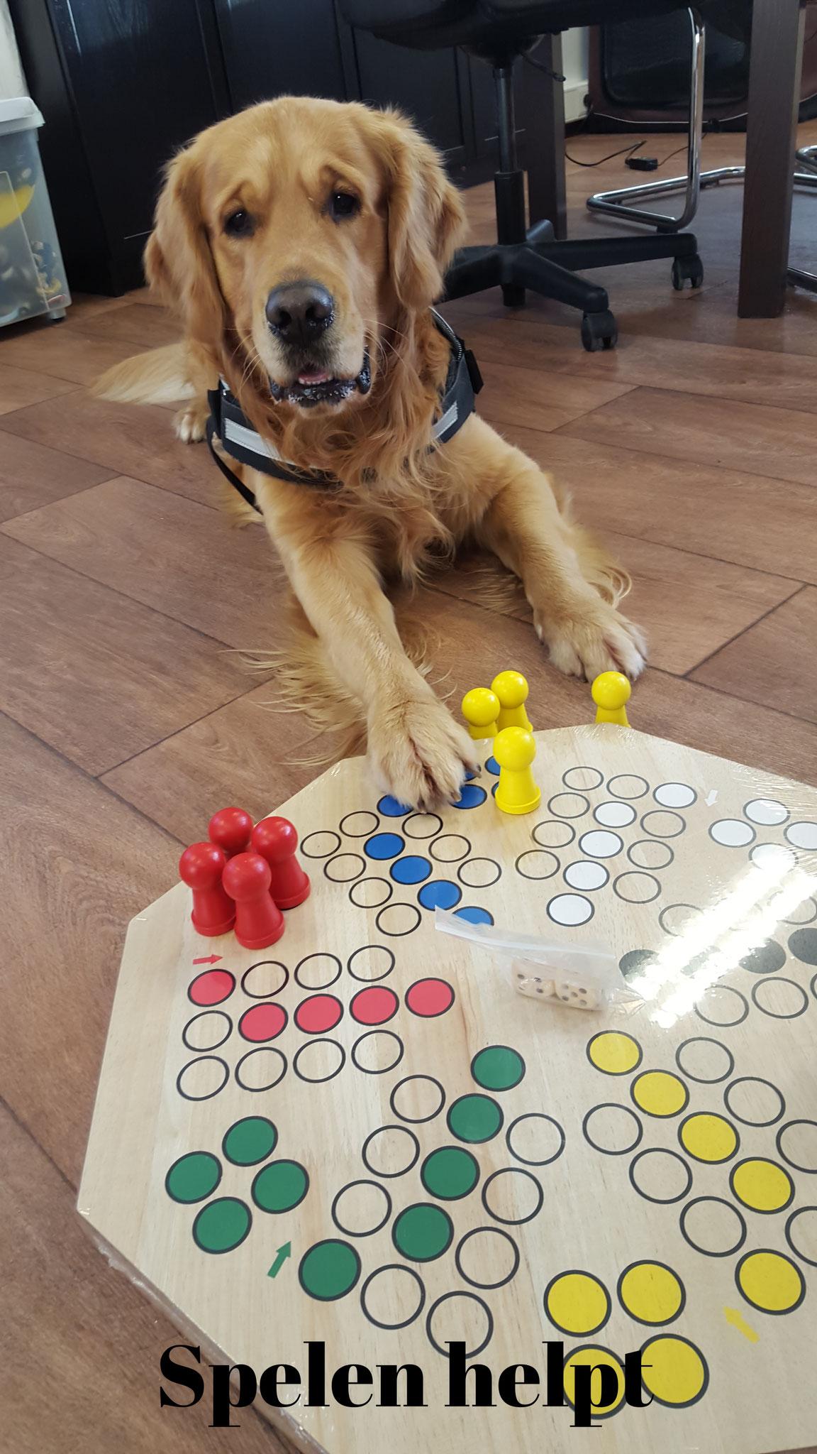 Hond erger je niet spelen!