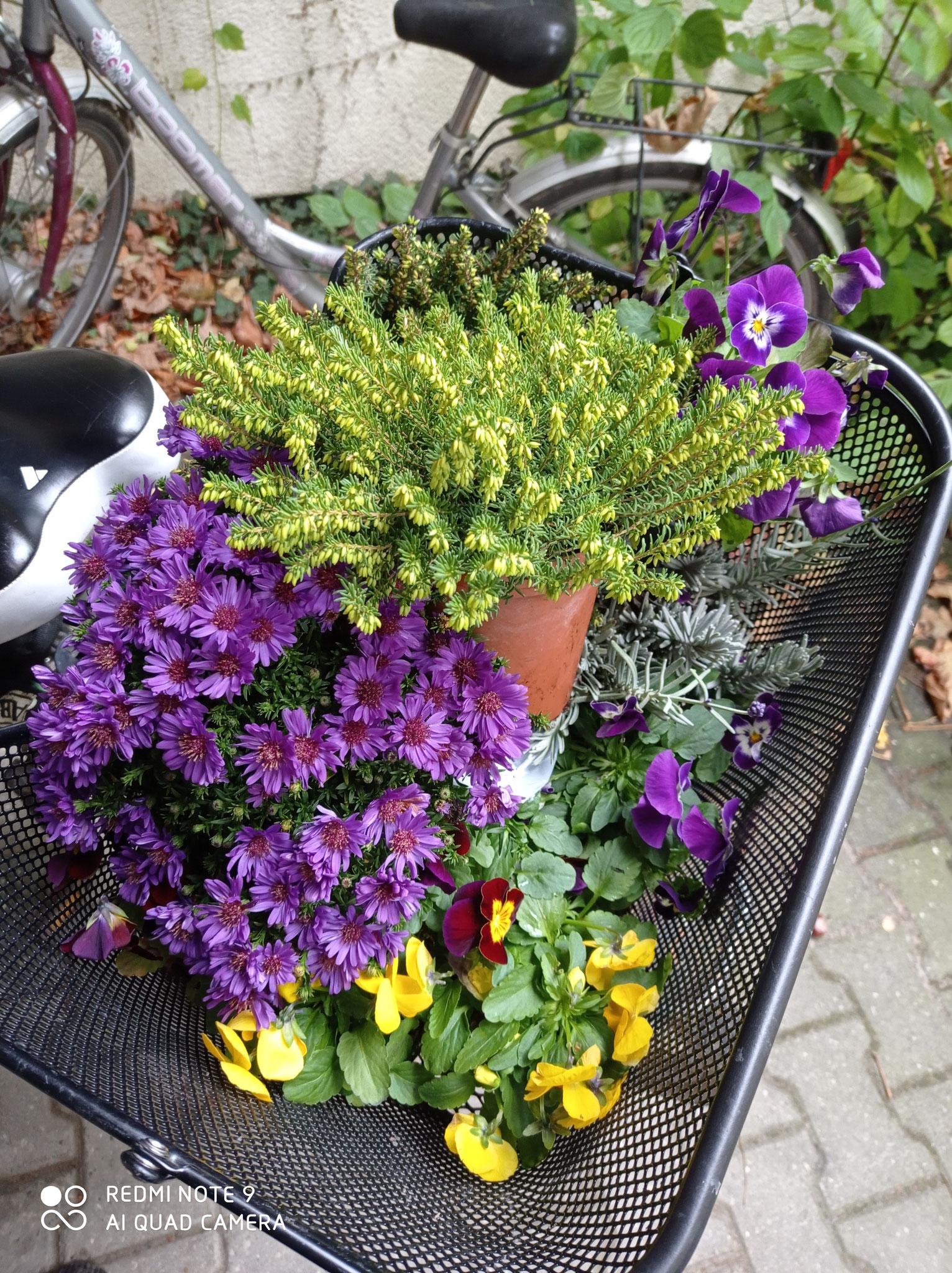 Ein Fahrrad-Korb voller Blumen :D