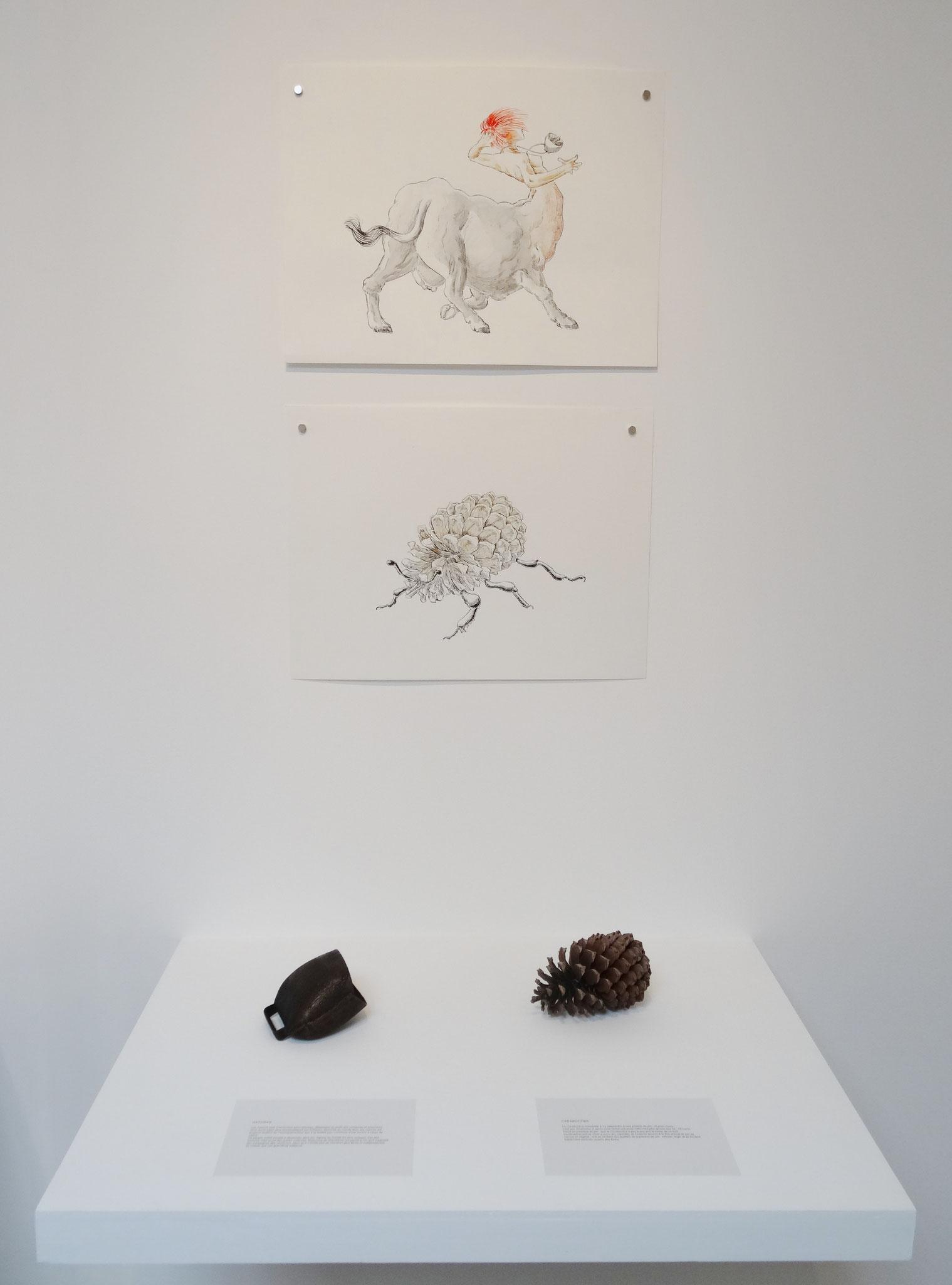 En haut : Noël Rasendrason, Hatoras, 2016. Encre et aquarelle sur papier Arches 300 gr., 31 × 41 cm. En bas : Noël Rasendrason, Carabocône, 2016. Encre sur papier Arches 300 gr., 31 × 41 cm.