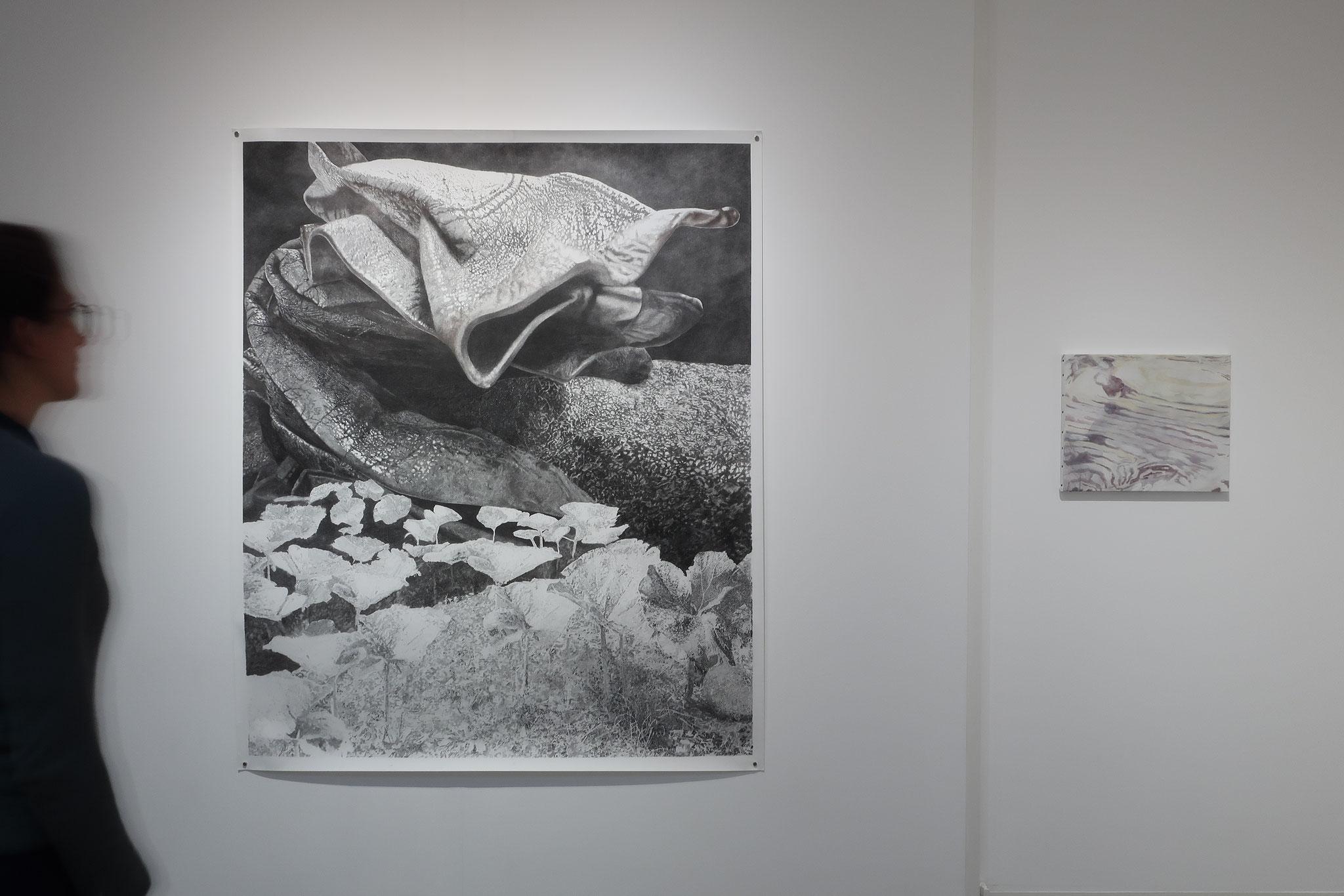 Narcisse Mue Niger brillant, fusain et mine graphite sur papier, 144 x 175,5 cm, 2018