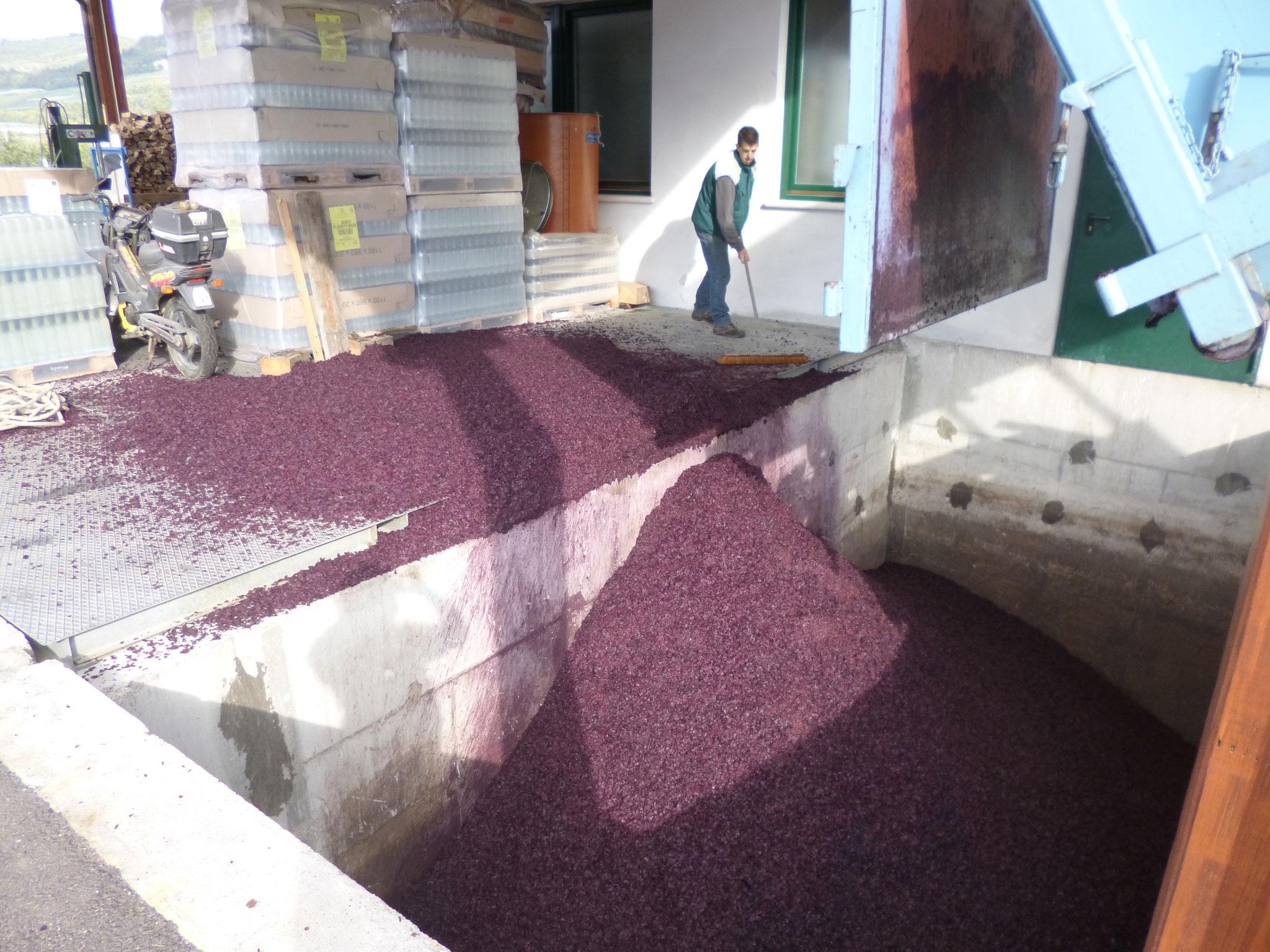 Distilleria Fedrizzi | produzione artigianale | processi 6