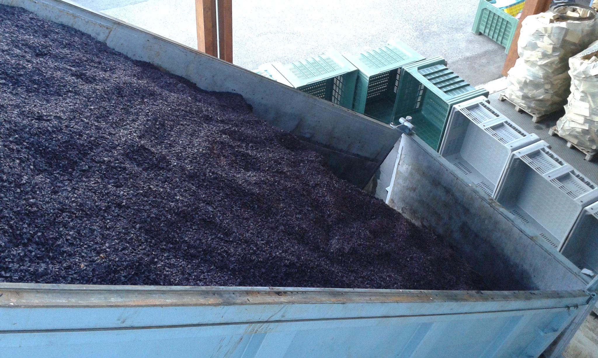 Distilleria Fedrizzi | produzione artigianale | processi 5