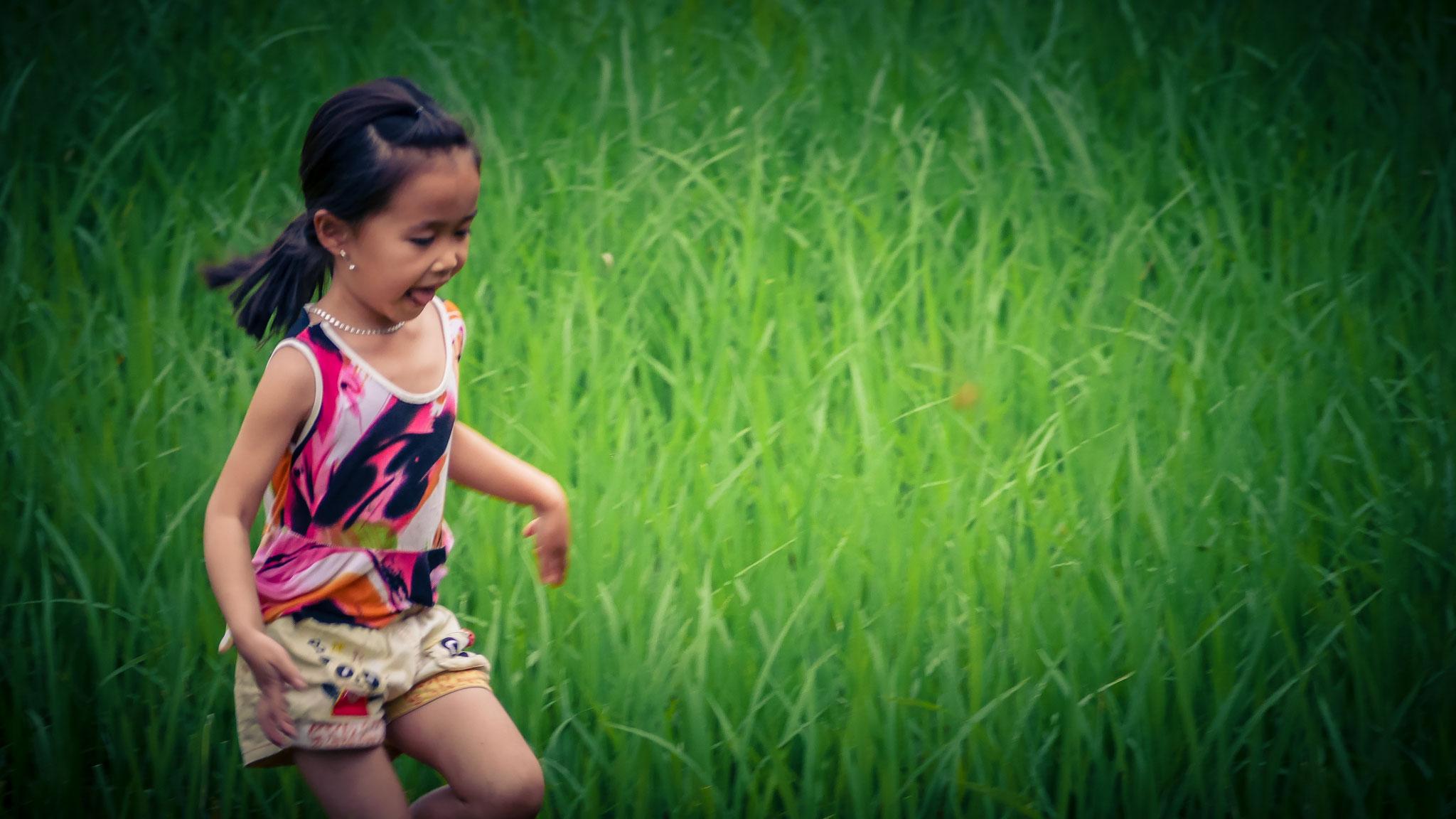 Reisfelder Mai Chau