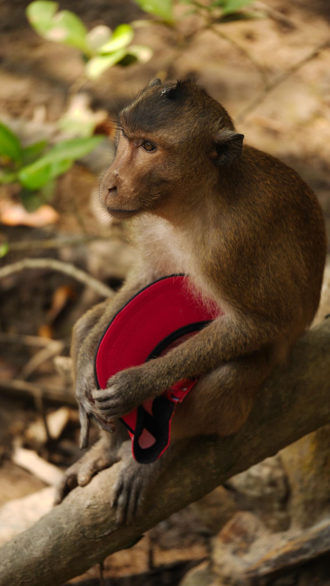 Monkey Island - Vorsicht Affen!