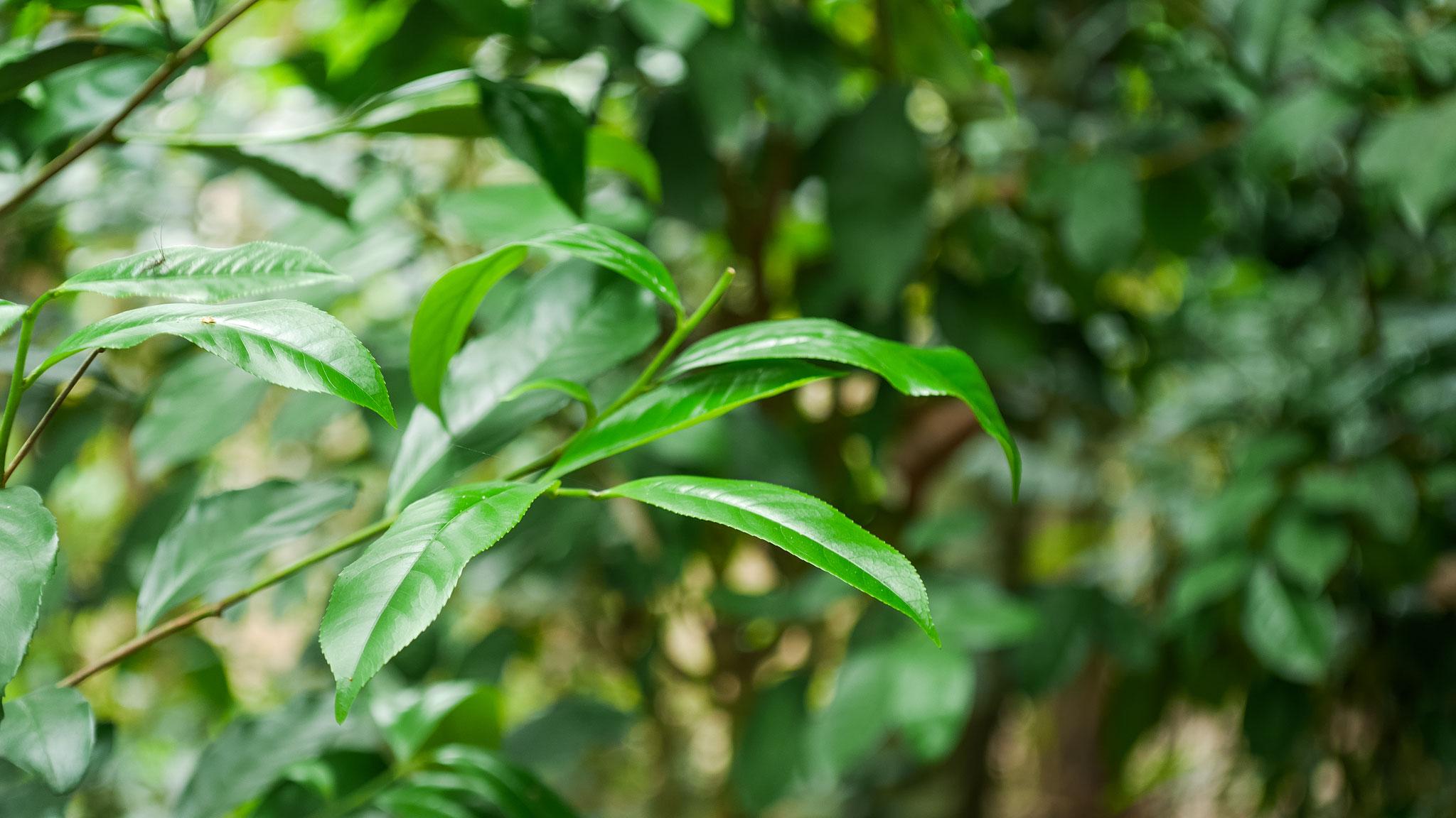 Hue - Besuch in einem Feng Shui Garden