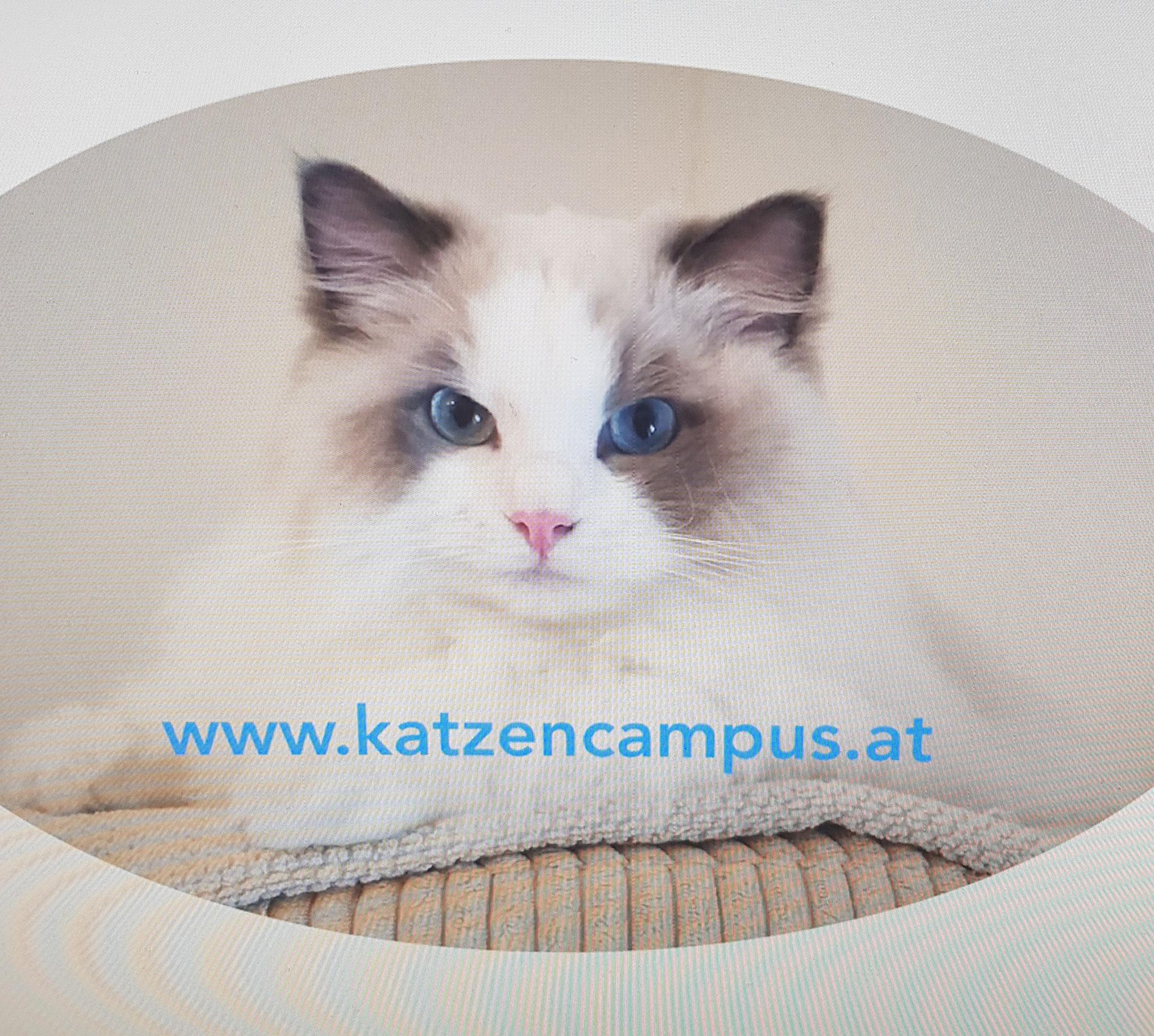 Katzencampus
