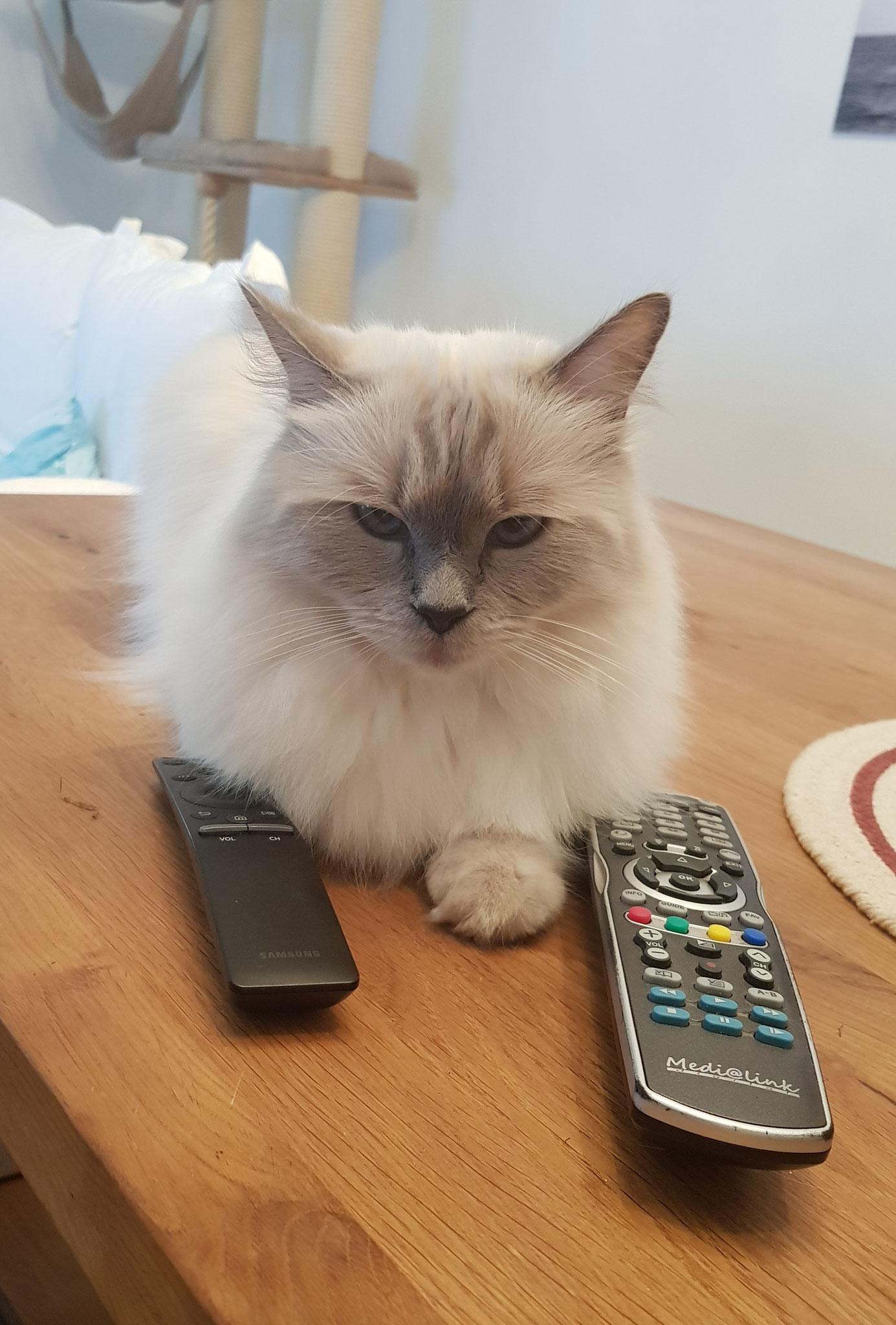 Katze will auch Katzencoach werden. gg