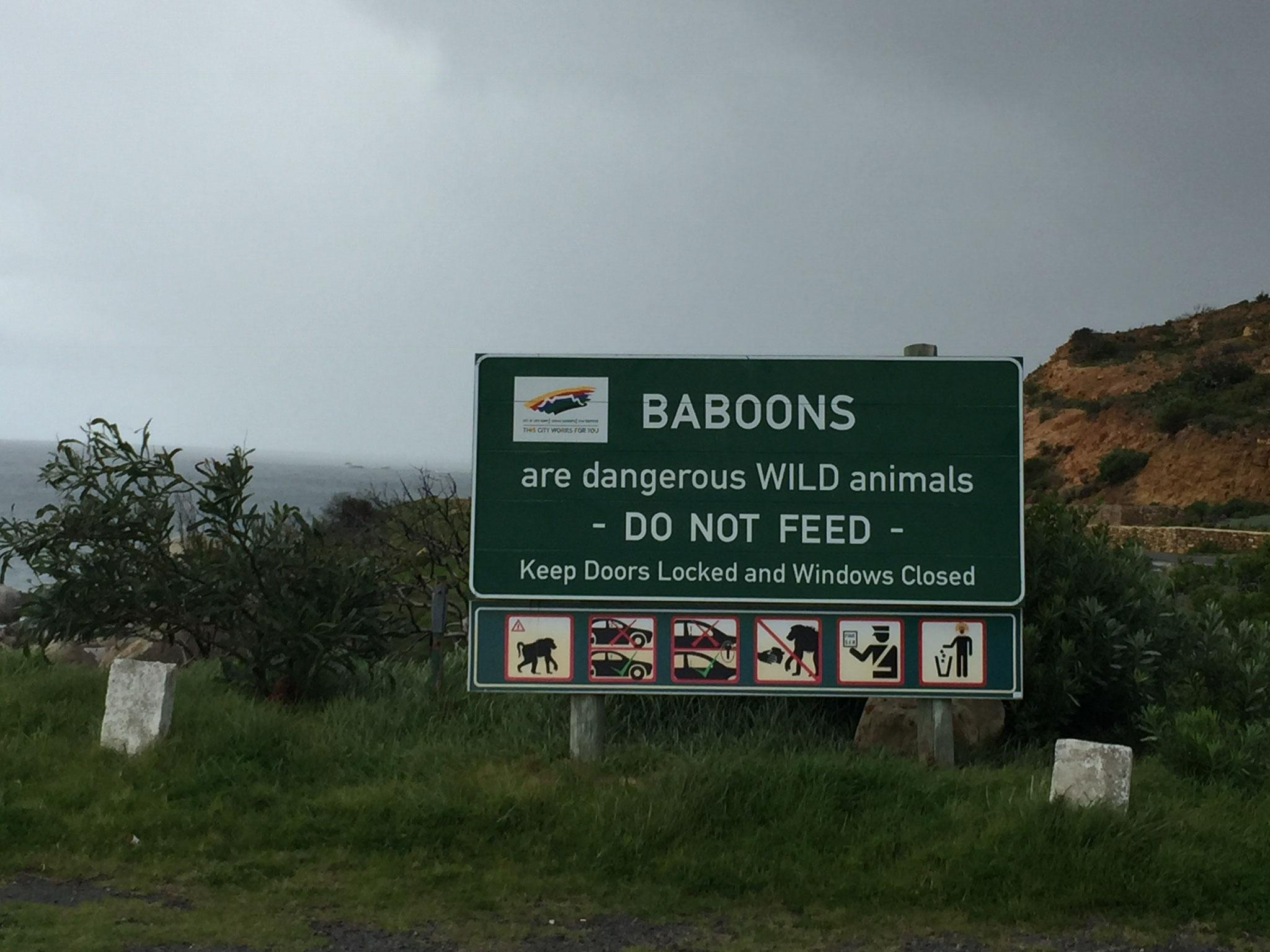 Überall Warnungen vor den Baboons ...
