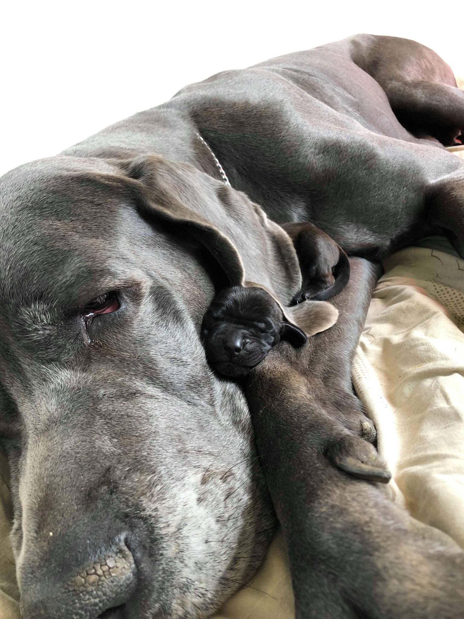 zauberhaft, Käthe und ihr Adoptiv-Knirps