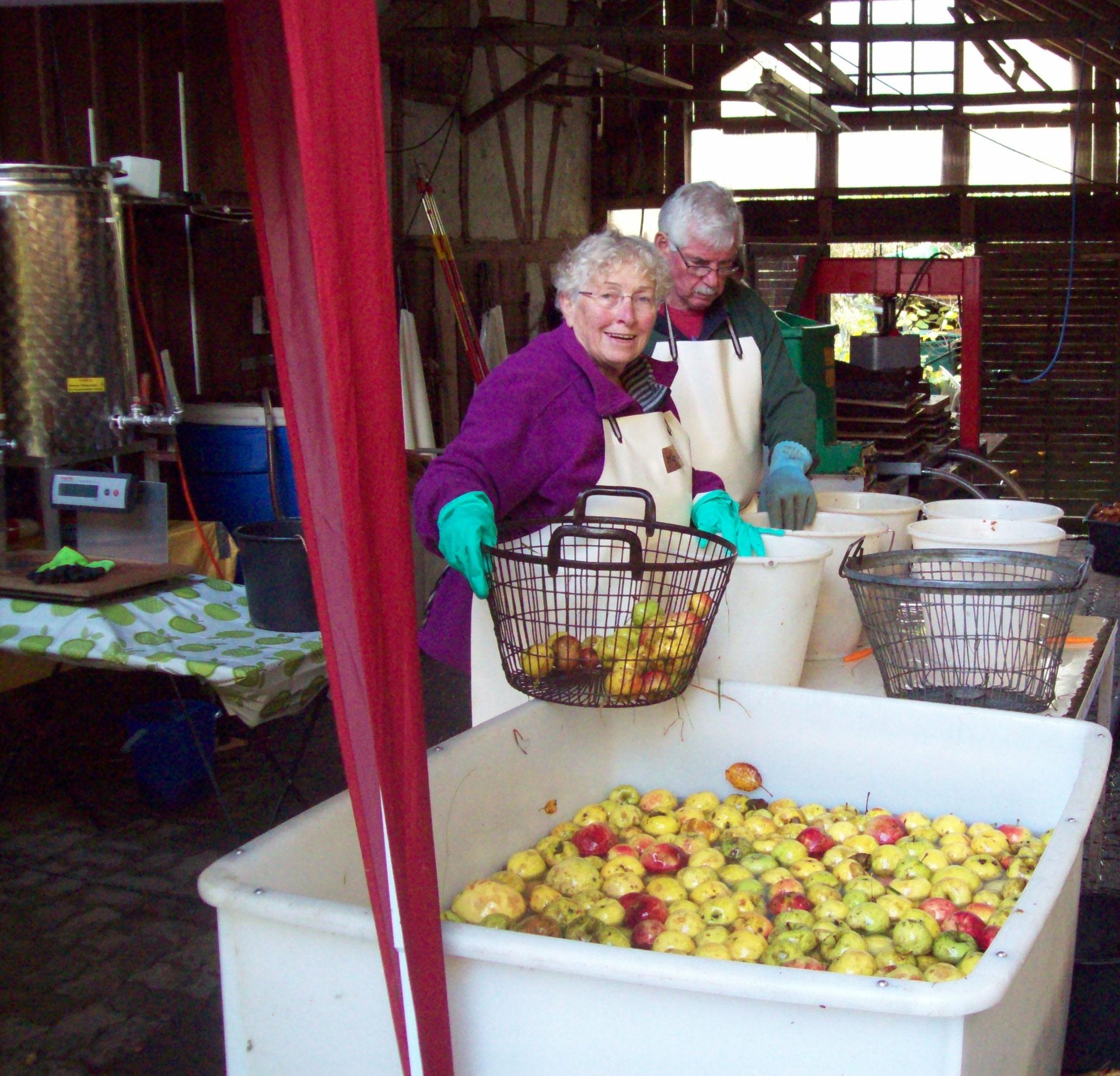 Reinigung und Handverlesung des Obstes