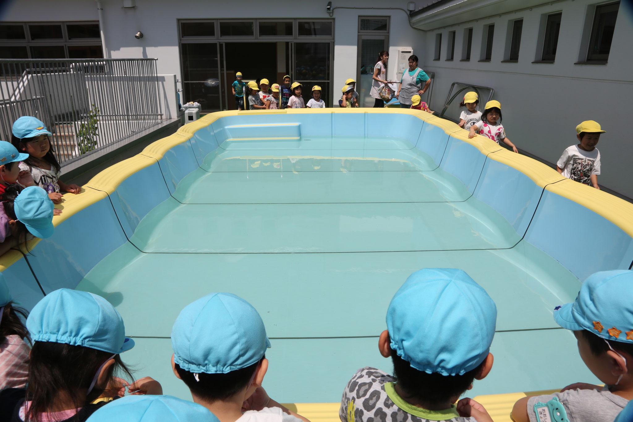 6月 プール開き・今年もプールの季節が始まります。