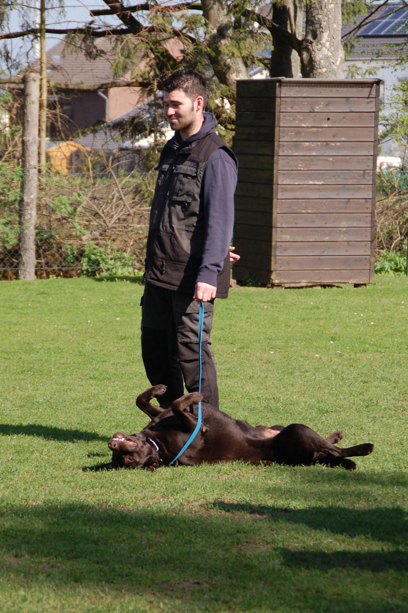 Nach der Arbeit ein tiefenentspannter Labrador
