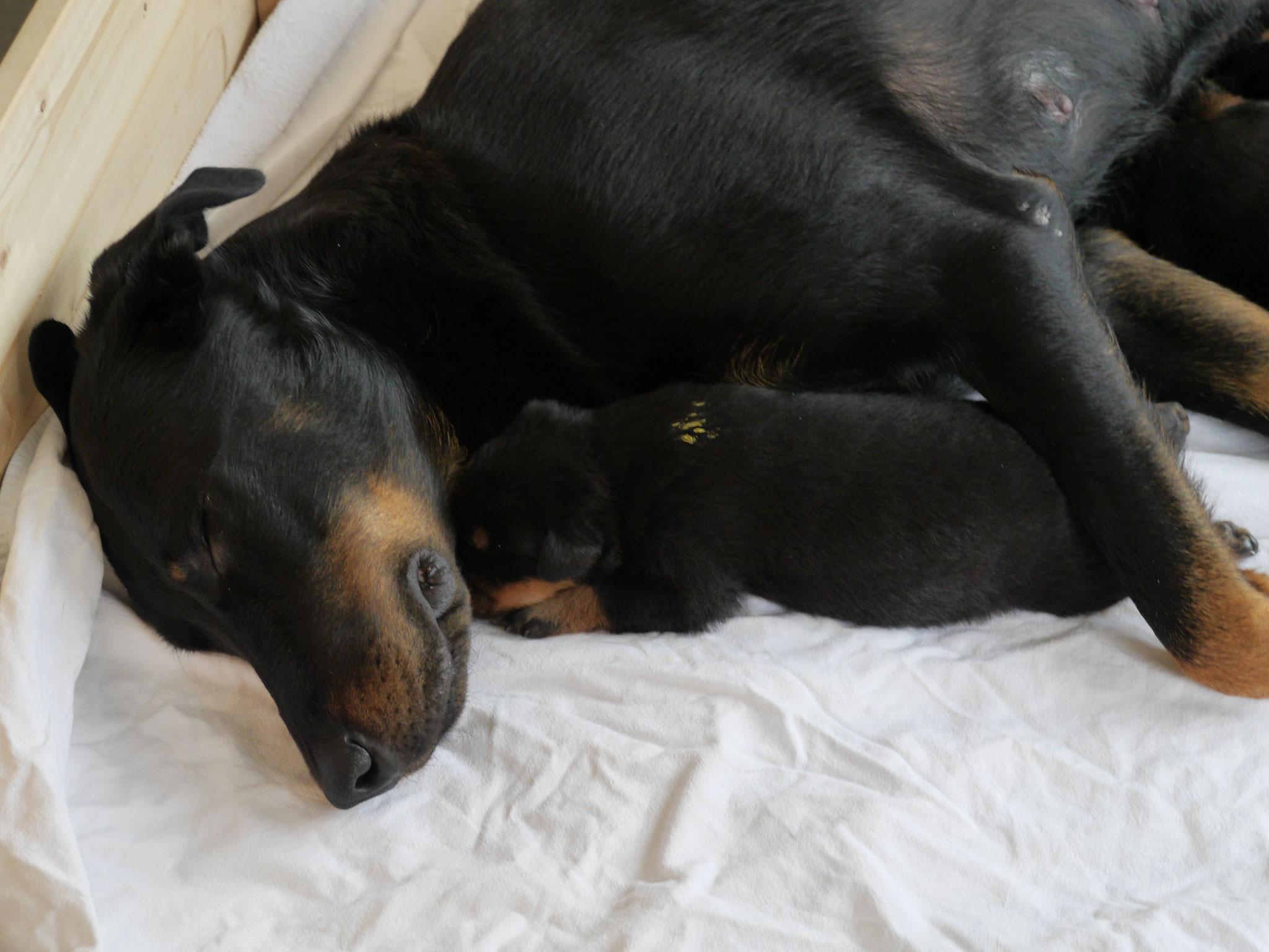 Mit der Mama kuscheln