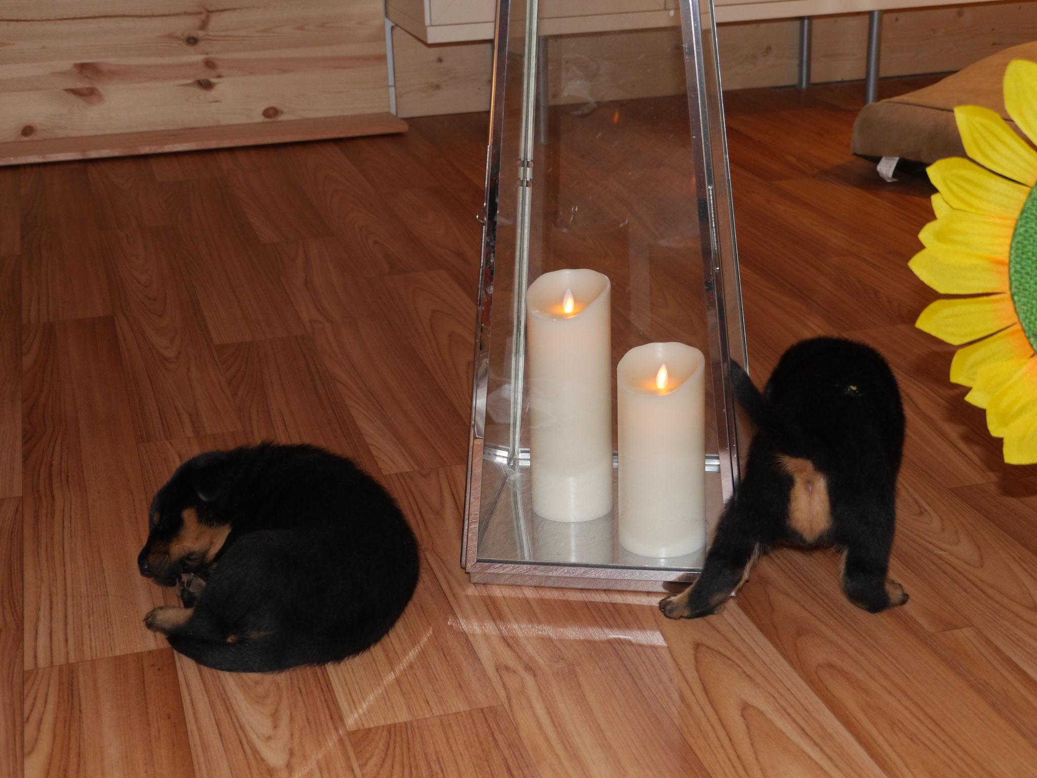 Keine Angst,die Kerzen sind nicht echt