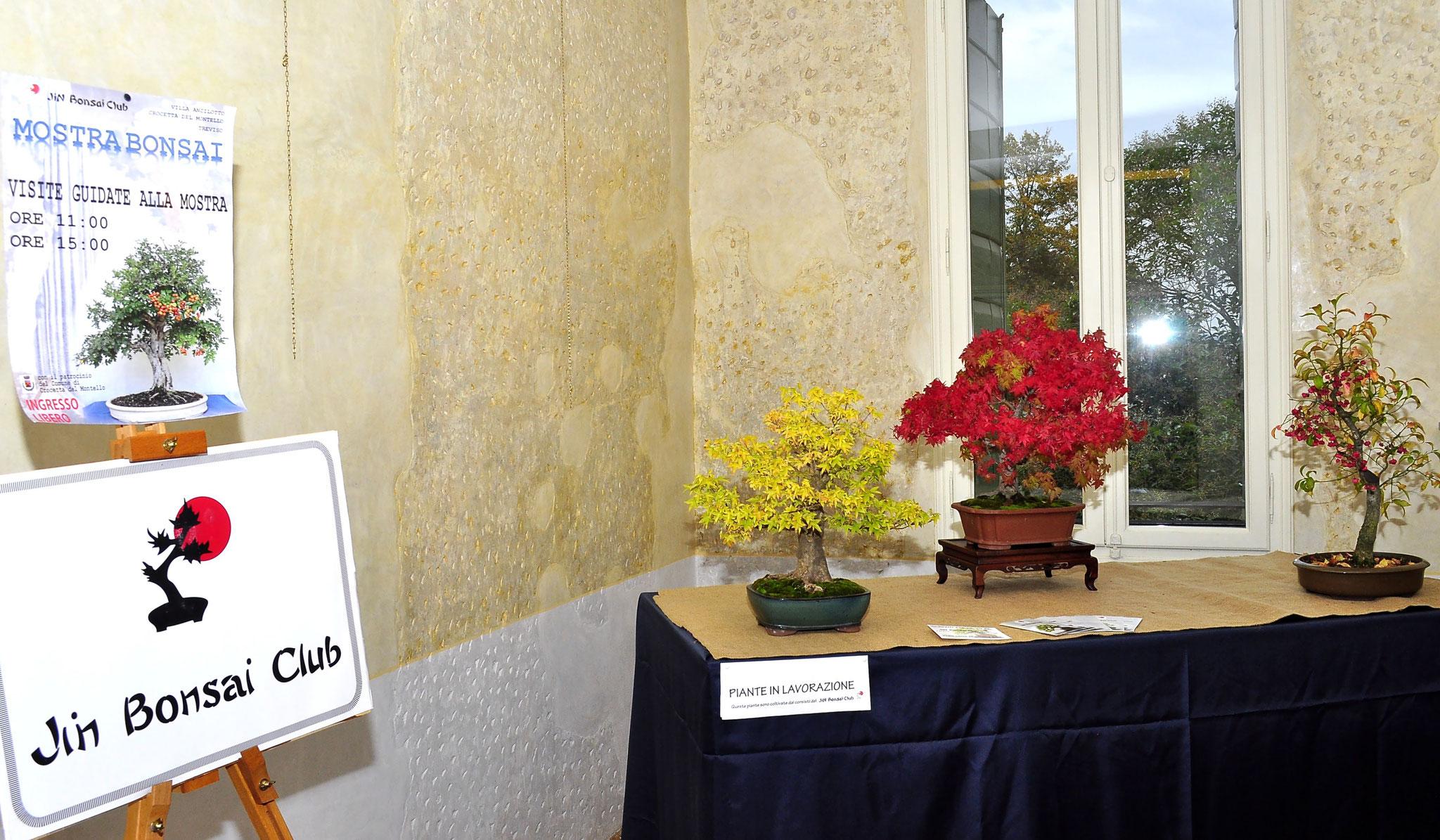 Esposizione piante in lavorazione