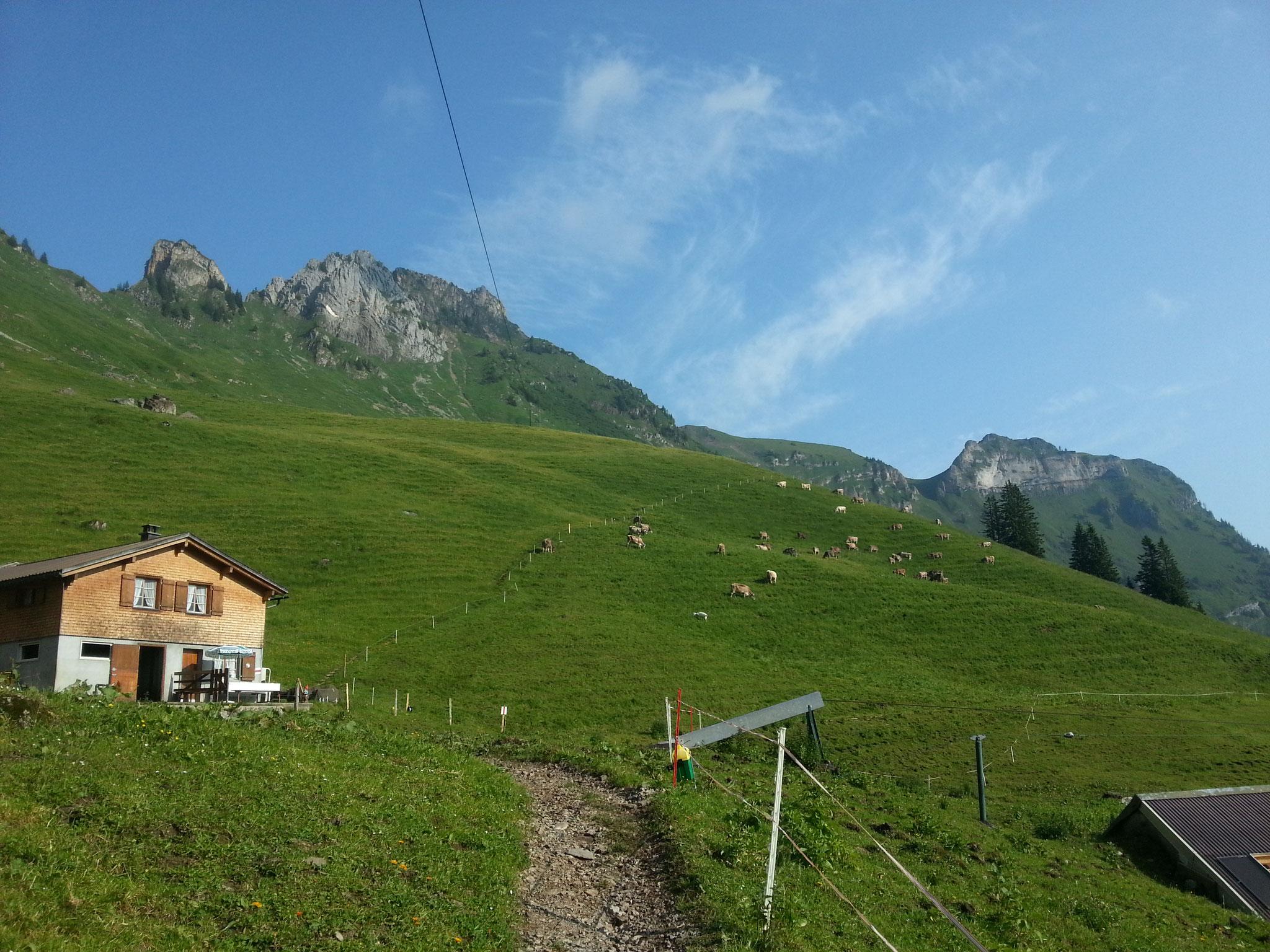 Unsere Alphütte mit den weidenden Kühen.