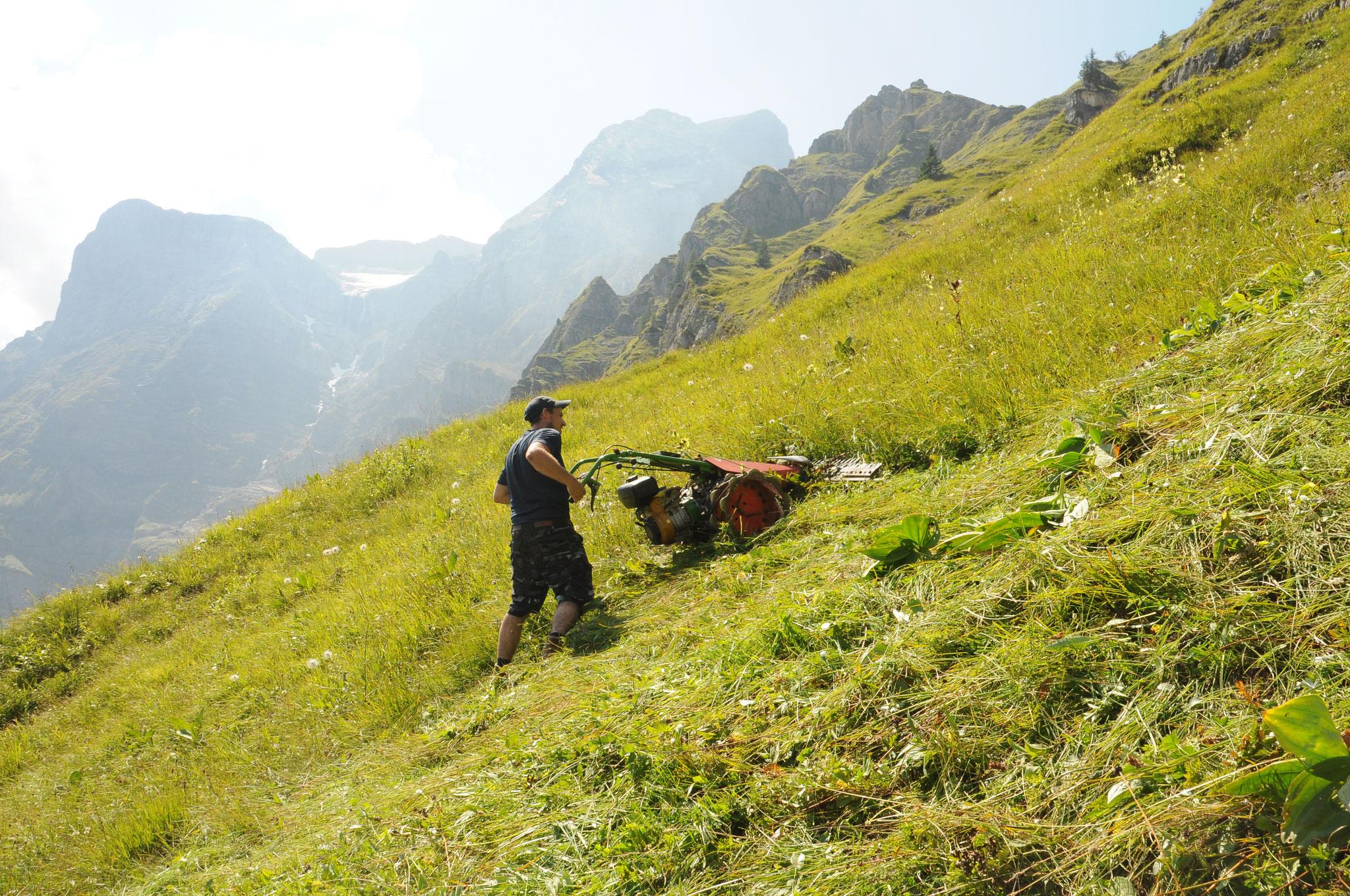 Im steilen Gelände wird das Gras gemäht, welches die Kühe nicht erreichen.