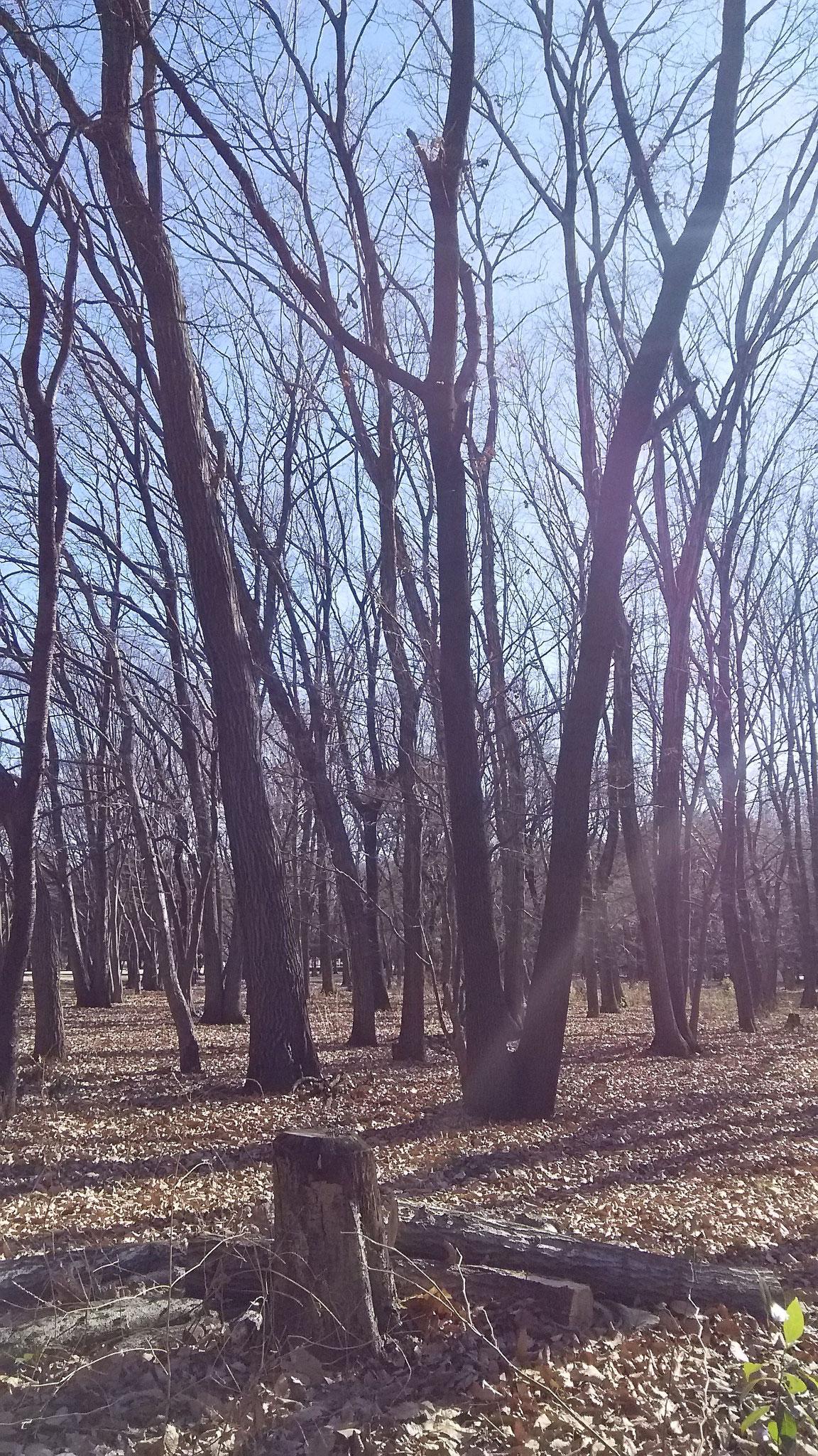 野川沿い(H30.1.3)