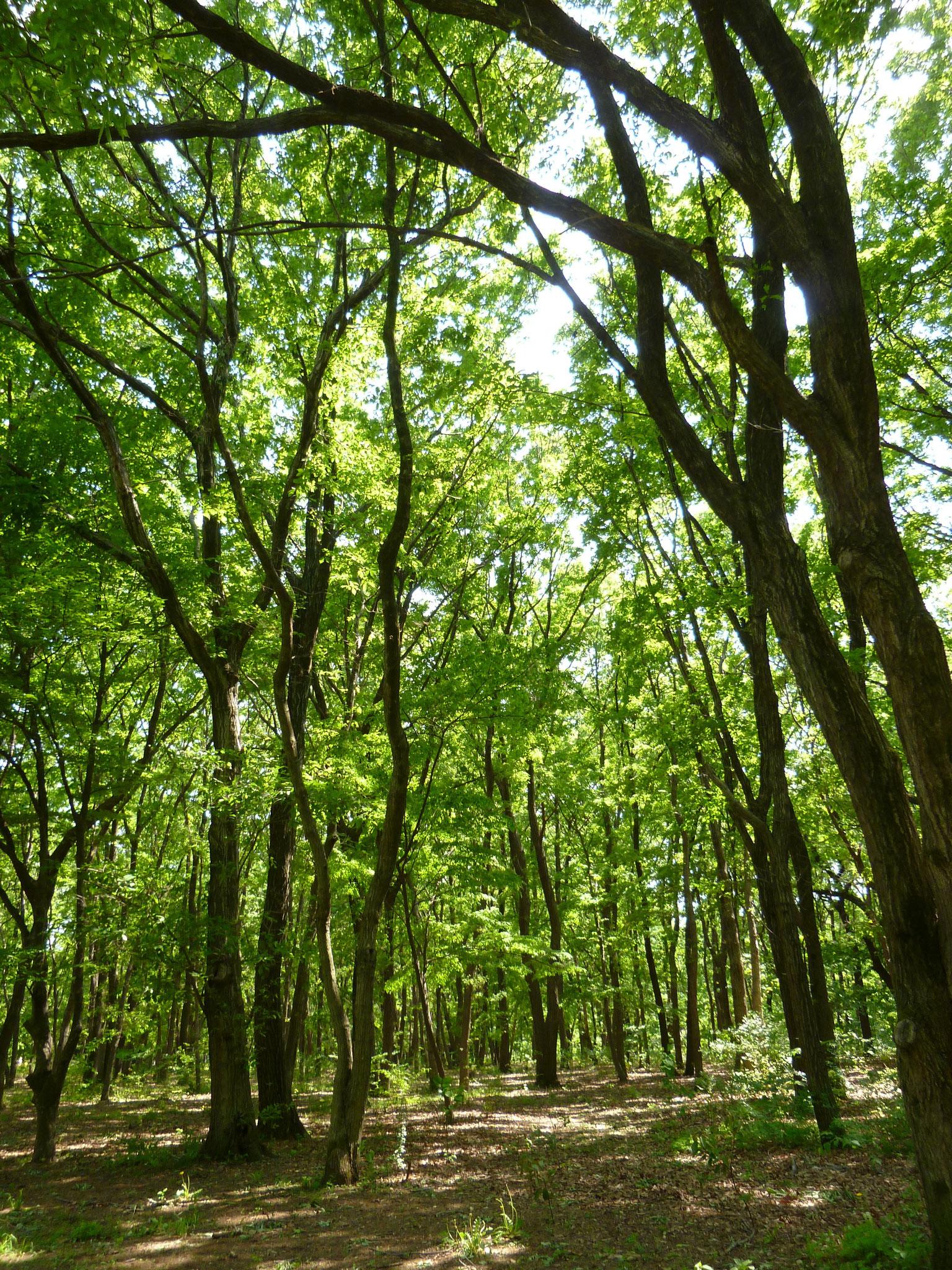 野川公園/樹々(h28.4.30)