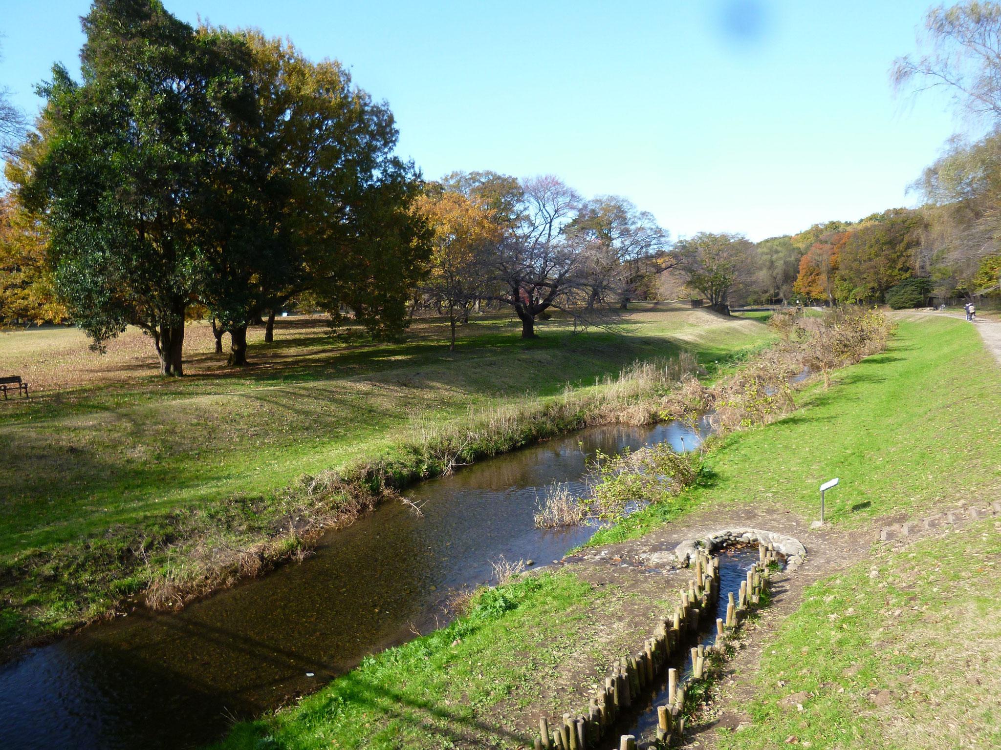 野川沿いの風景(h28.11.29)