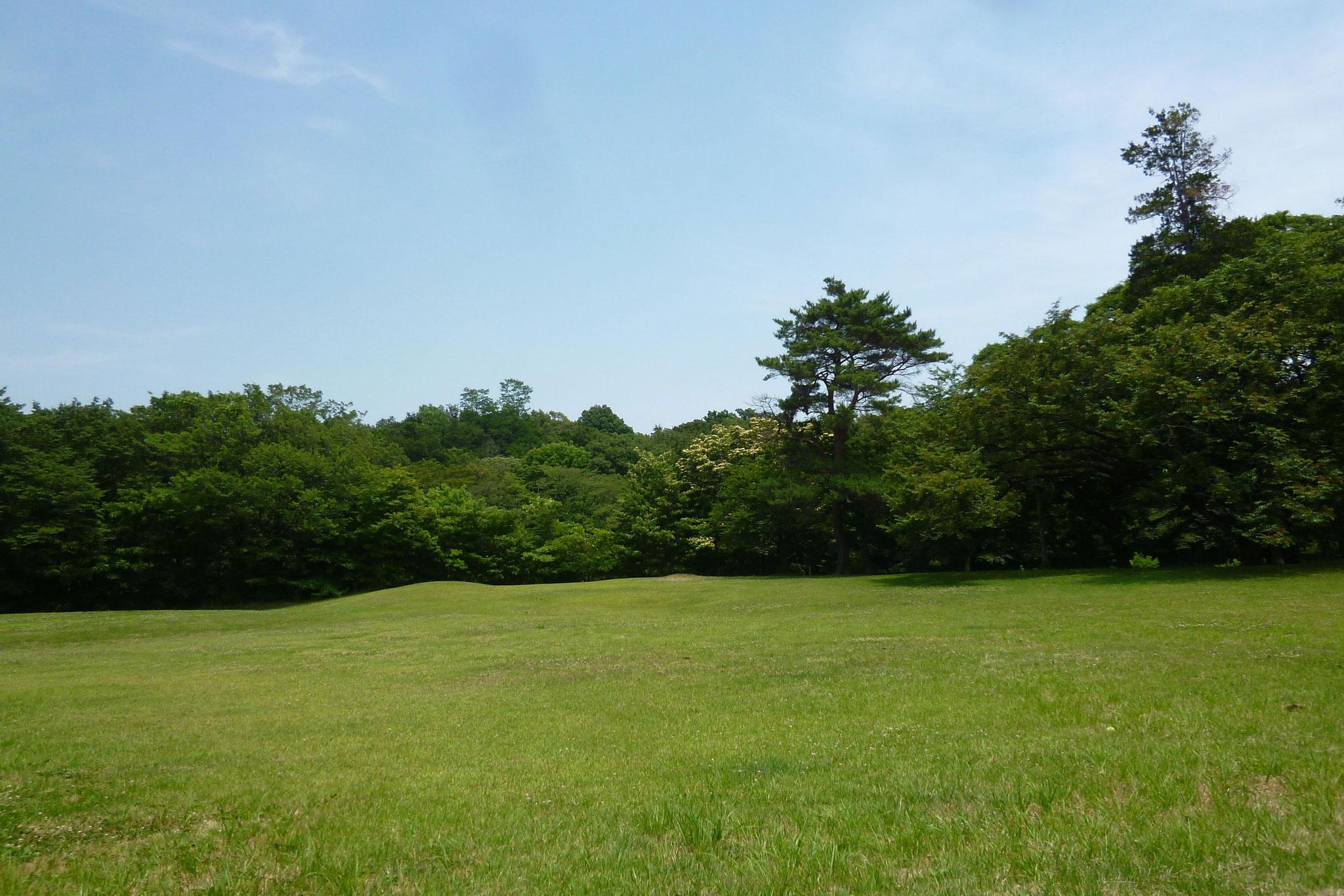 野川公園(H29.6.20)