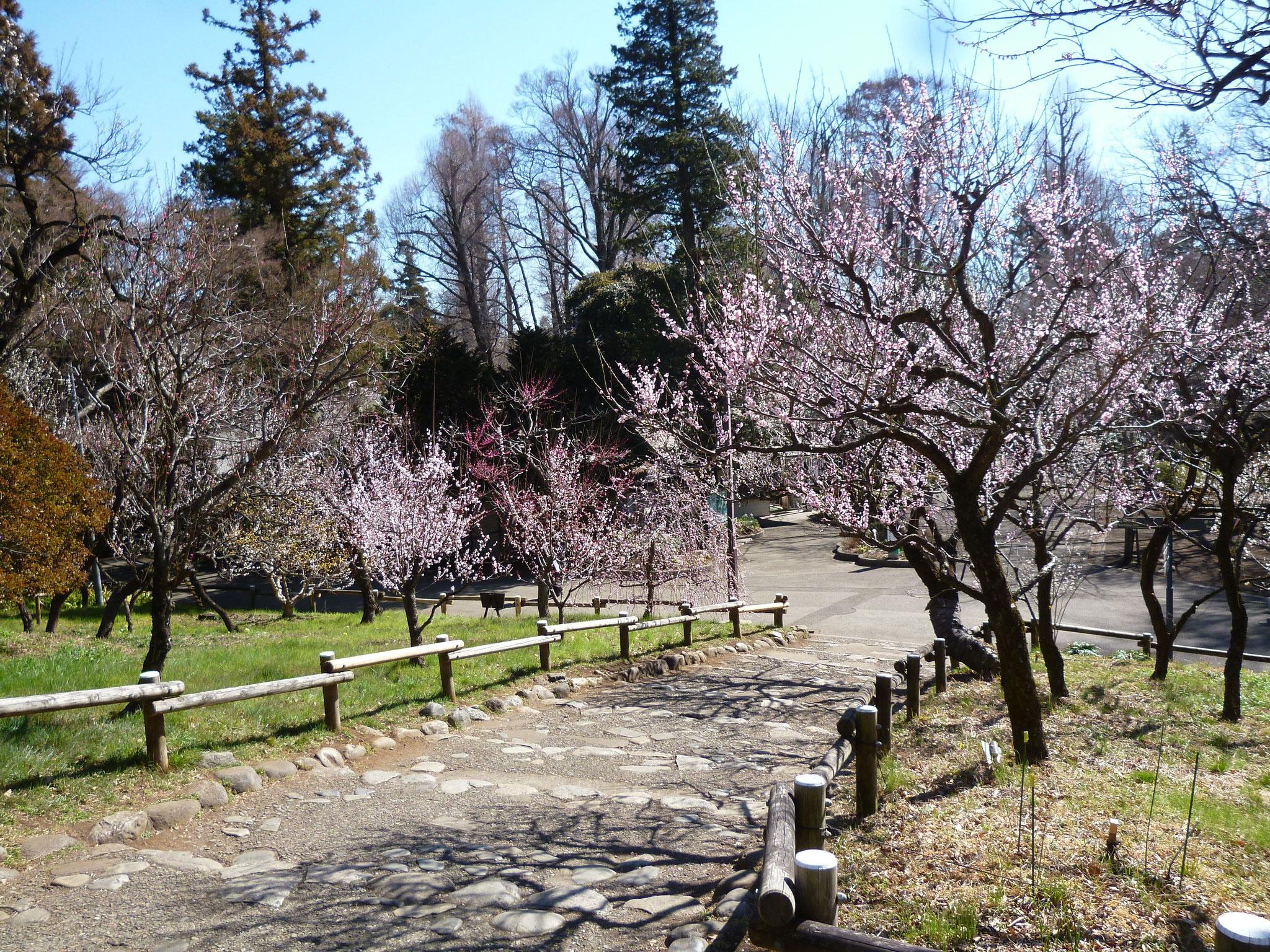 井の頭公園(2017.3.3)