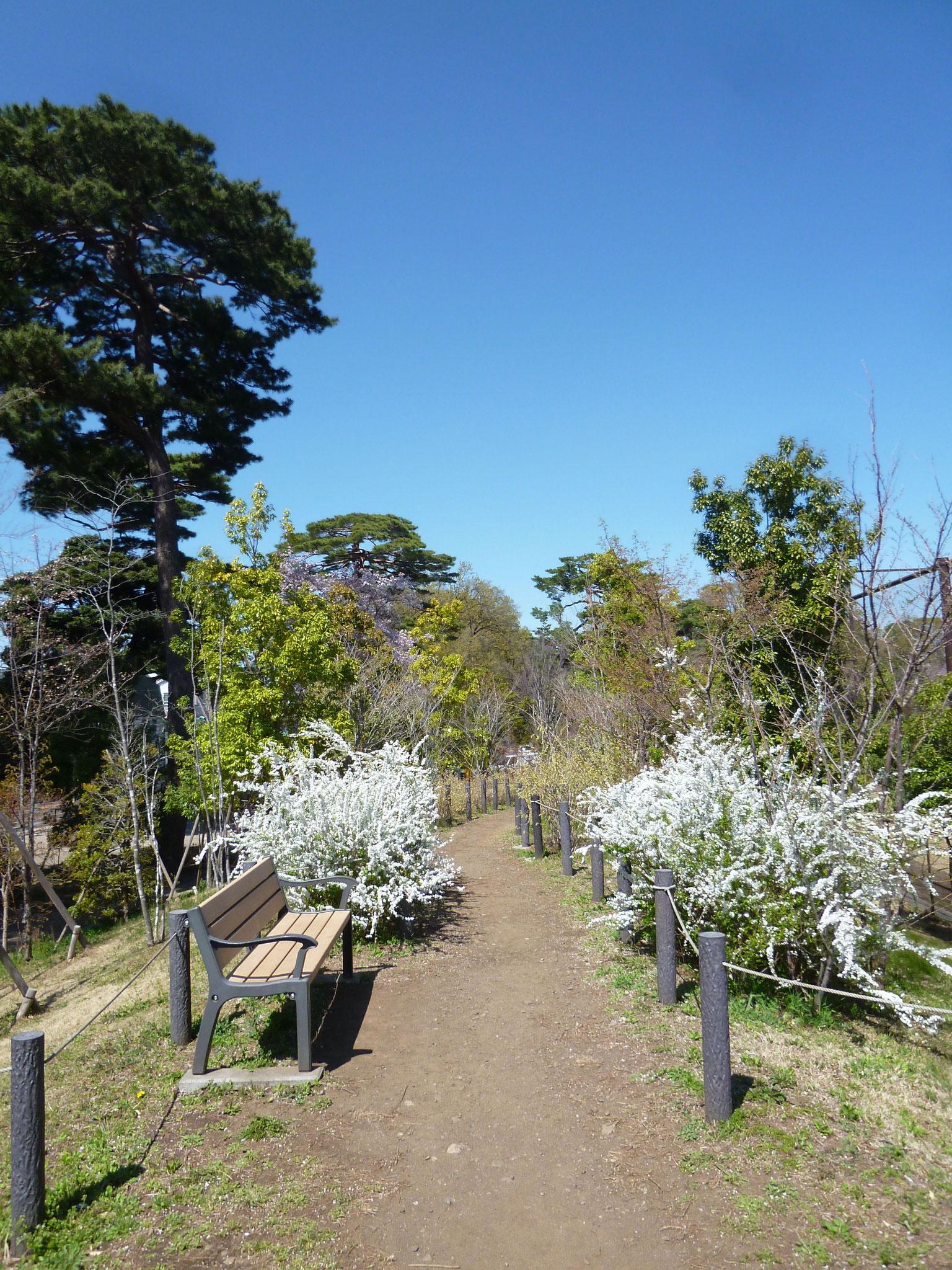 井の頭恩賜公園西園(2018.3.30)