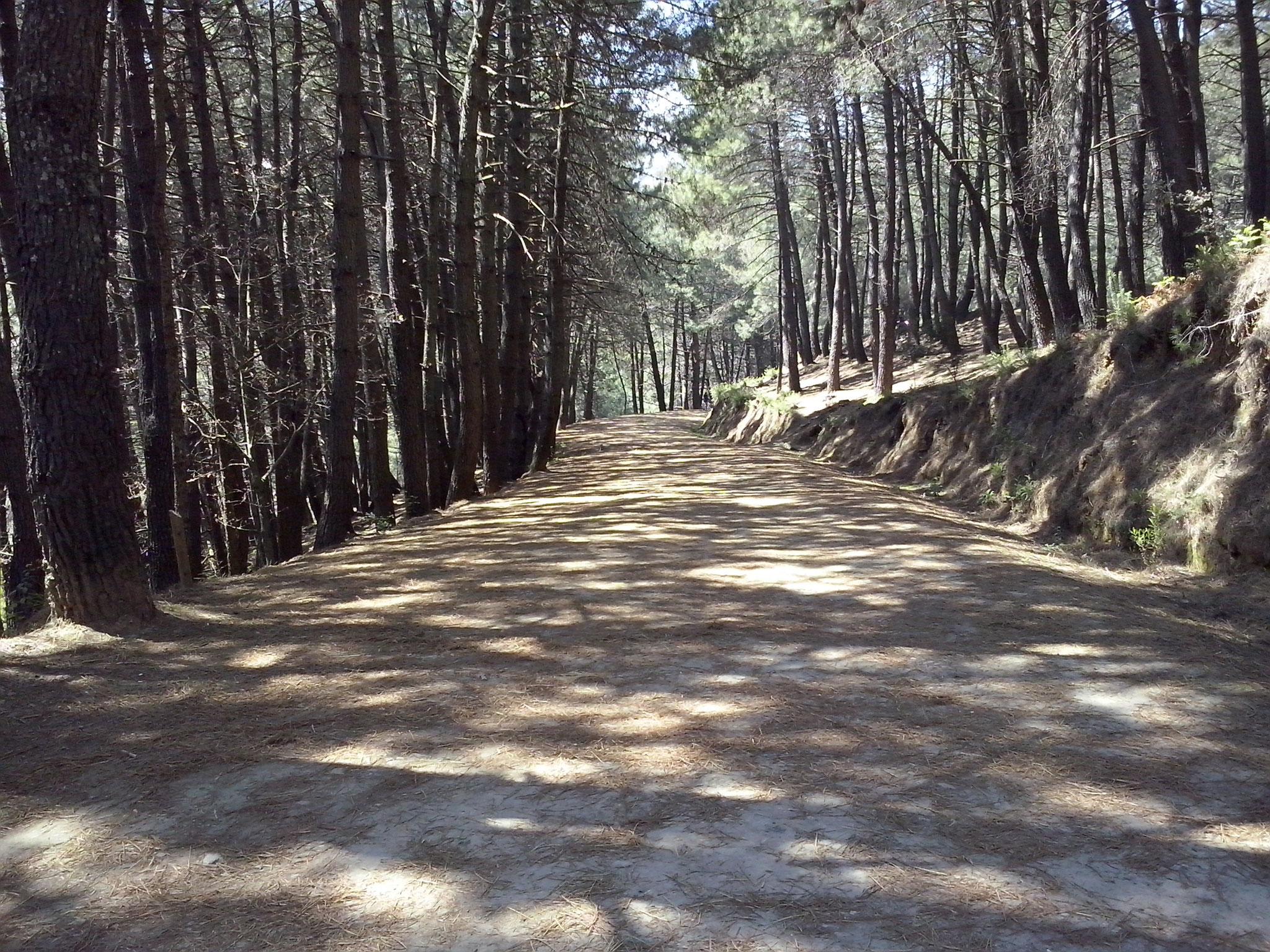 Camino del Juanar. Alba Ceballo Cebrián. 5ºA