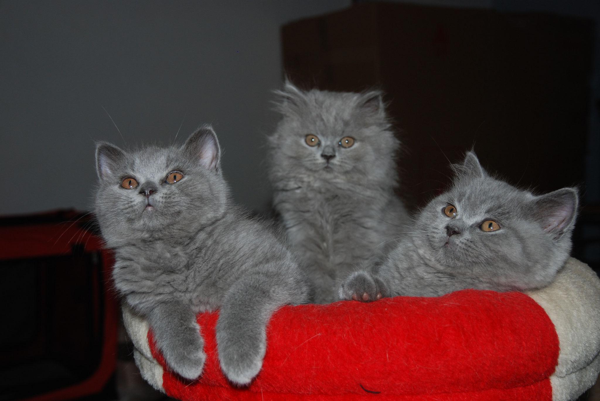 Naya, Noé et Nout
