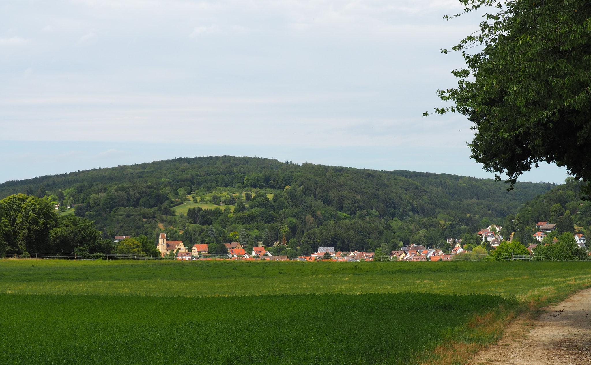Auch bei wenig Regen liegt unser Reichenbach im grünen Bereich.