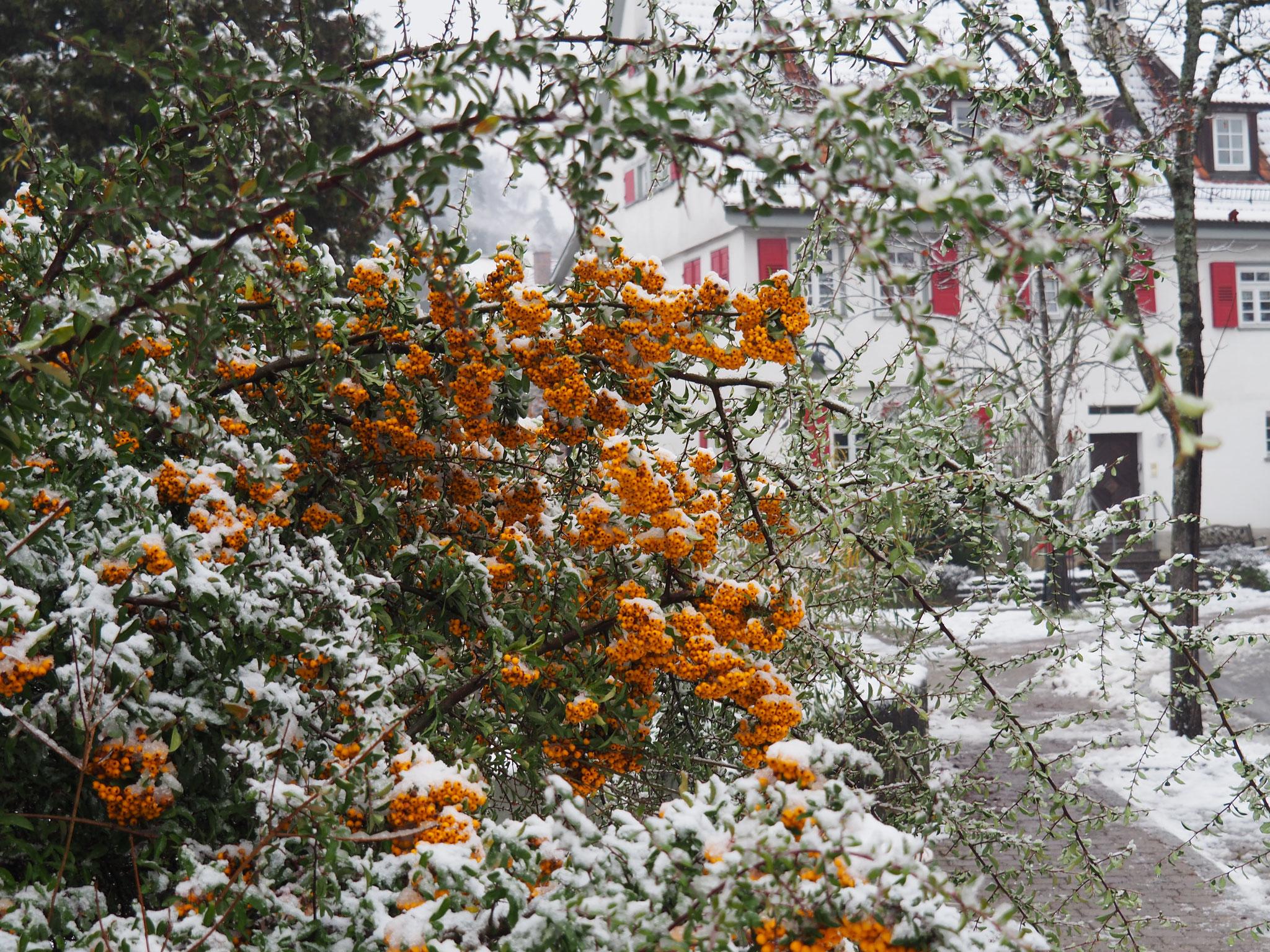 Erster zaghafter Schneefall Anfang Dezember.