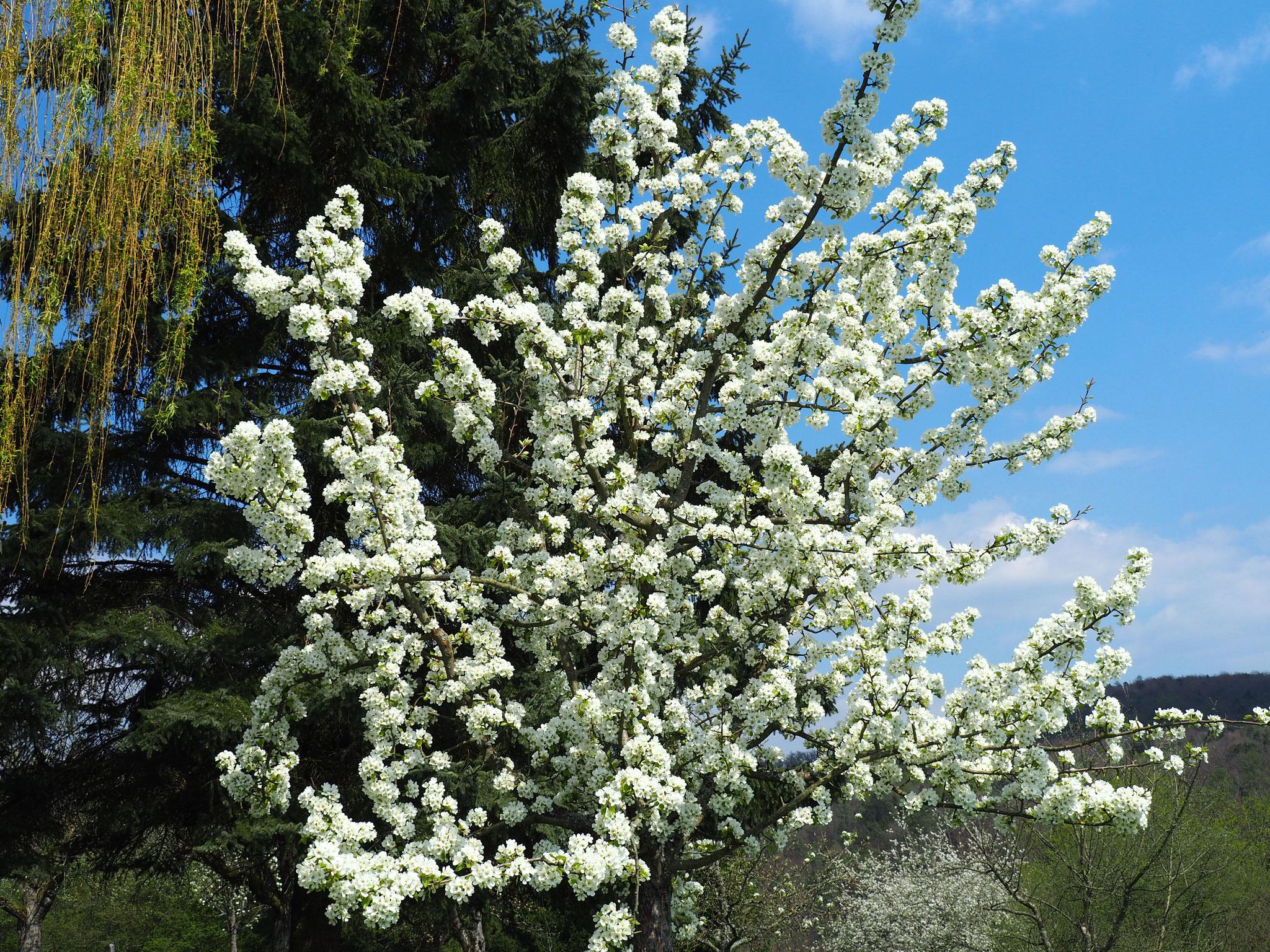 Allgemein schöne Blüte zur Osterzeit.
