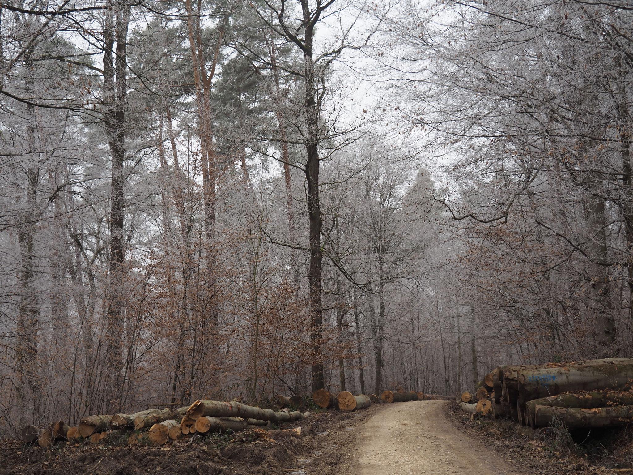Kein Schnee, ein bisschen Frost im viel zu warmen Januar.                               ...........Fotos  E.H.